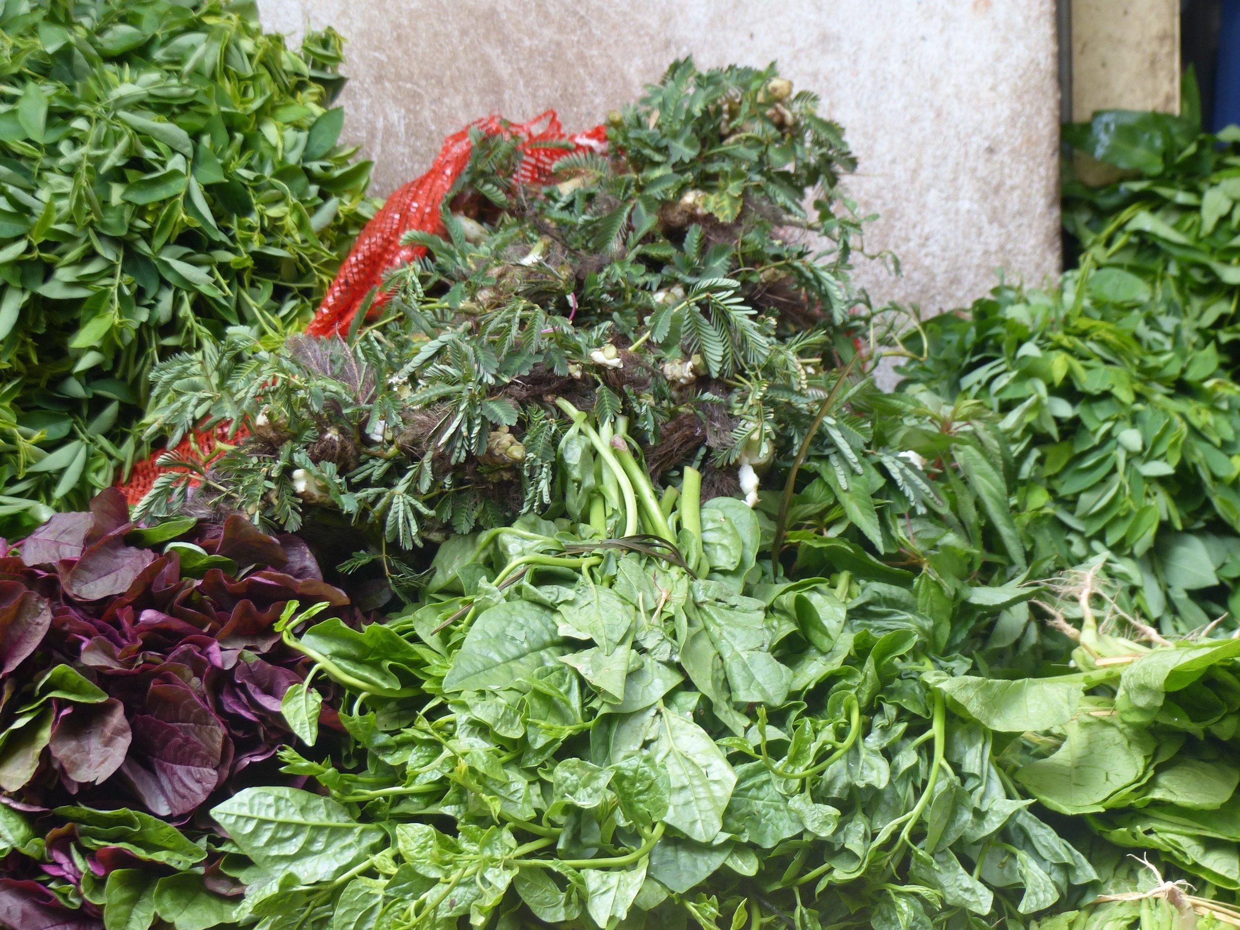 I've never seen so many herbs/greens