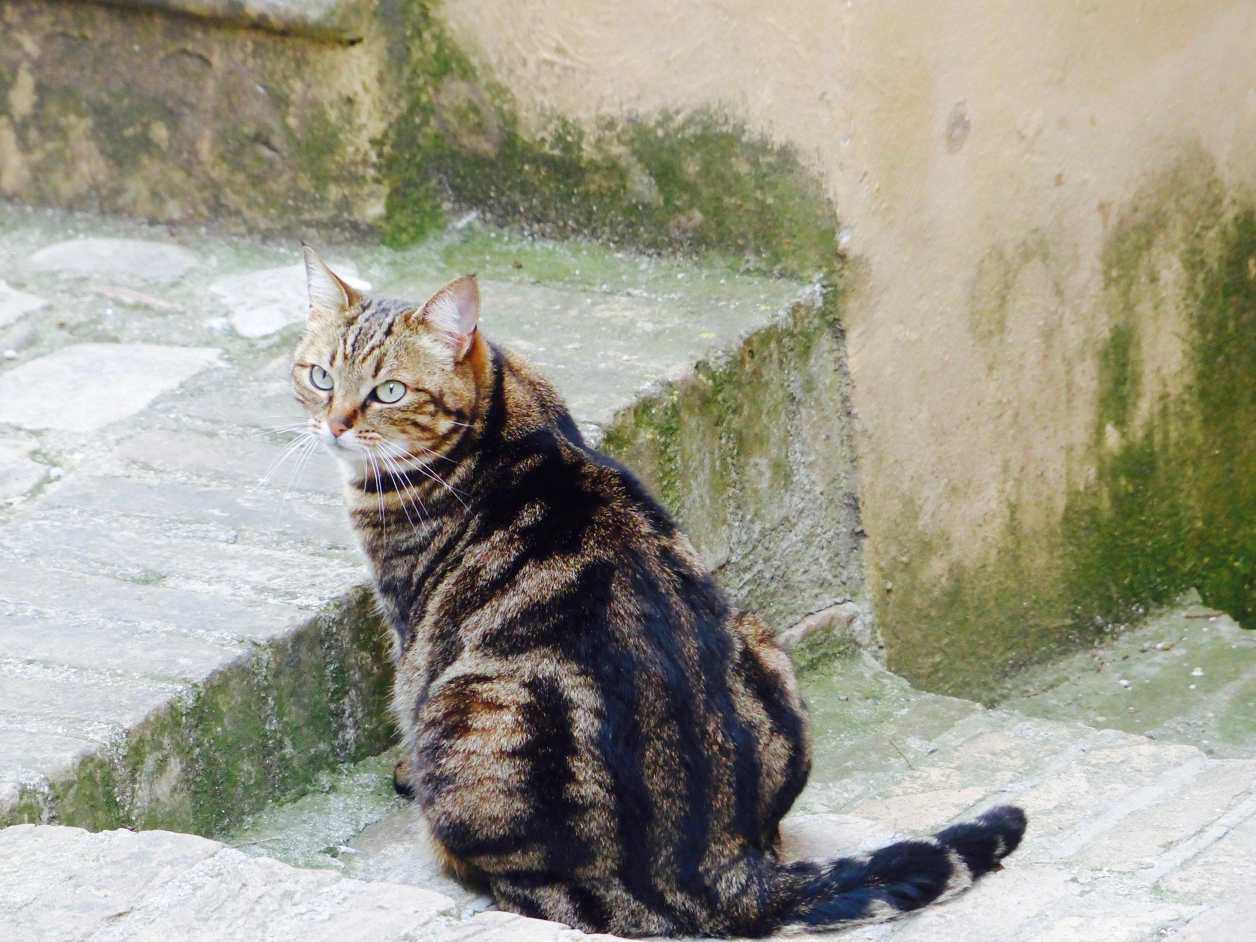 spello_cat.jpg