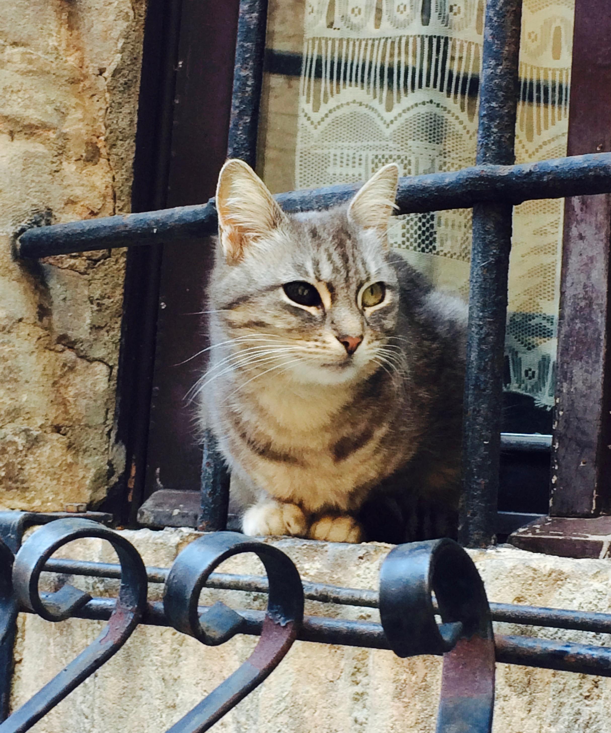 spello_cat3.jpg