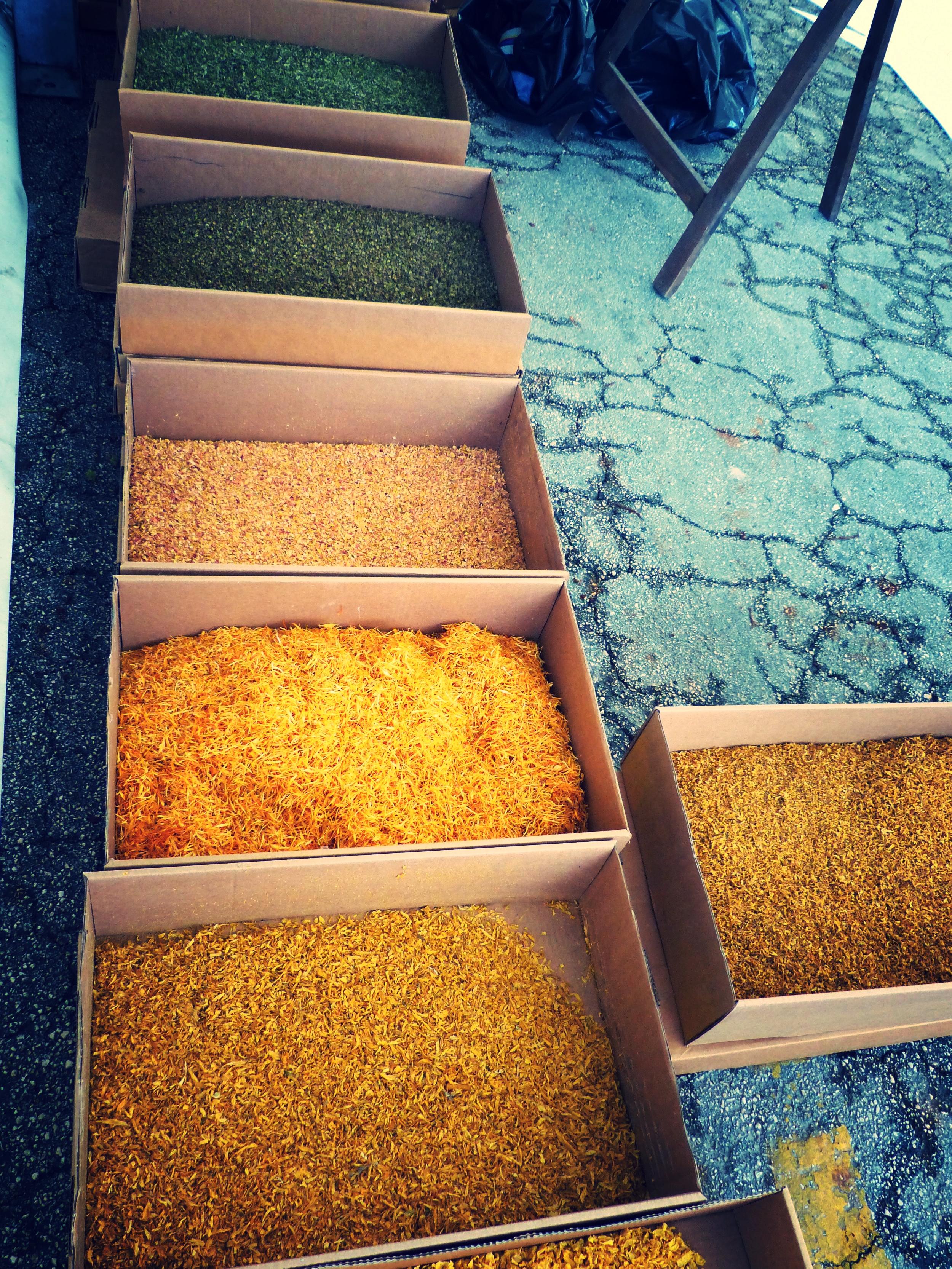 Petals ready for Infiorata in Spello, Umbria