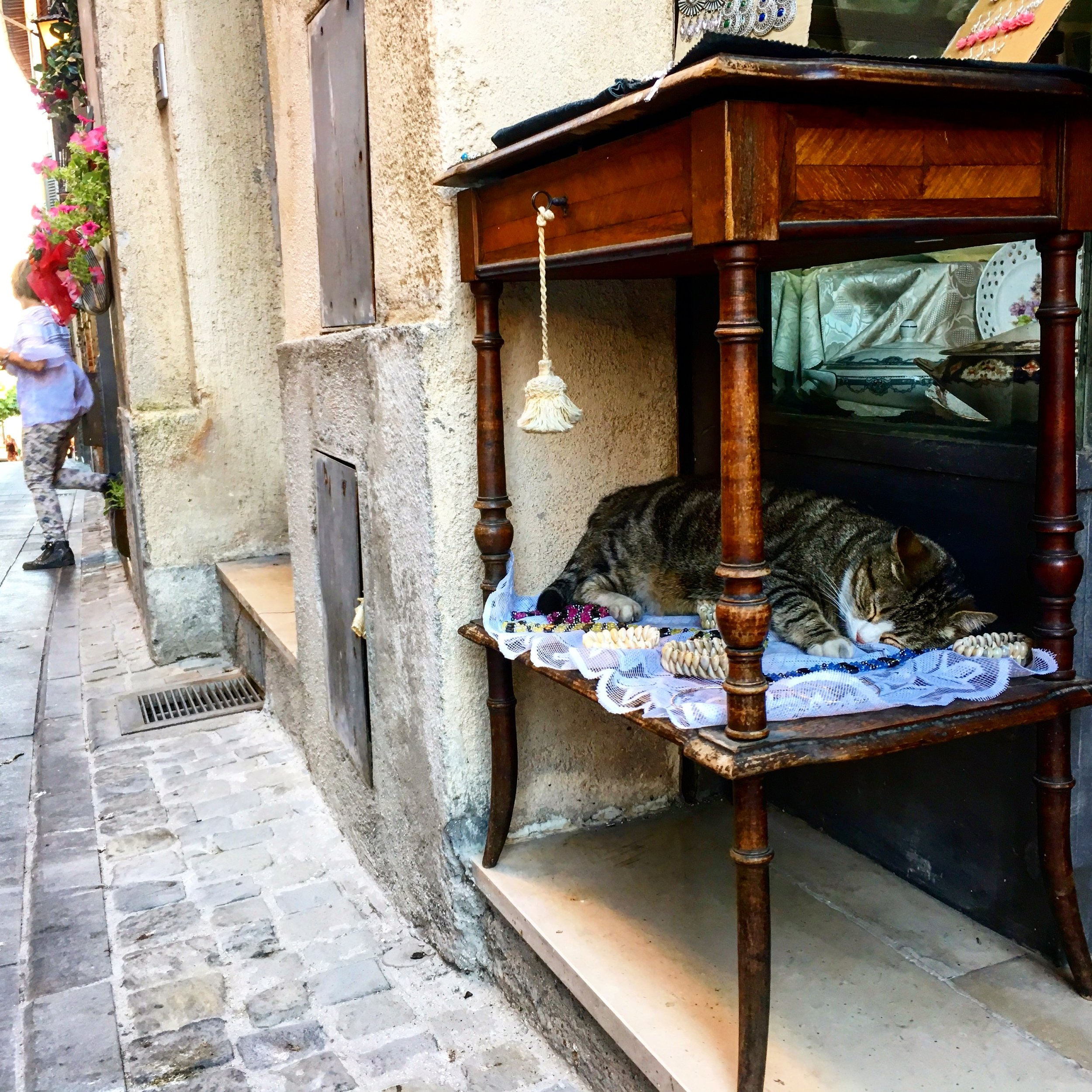 Catnap in Spello, Umbria