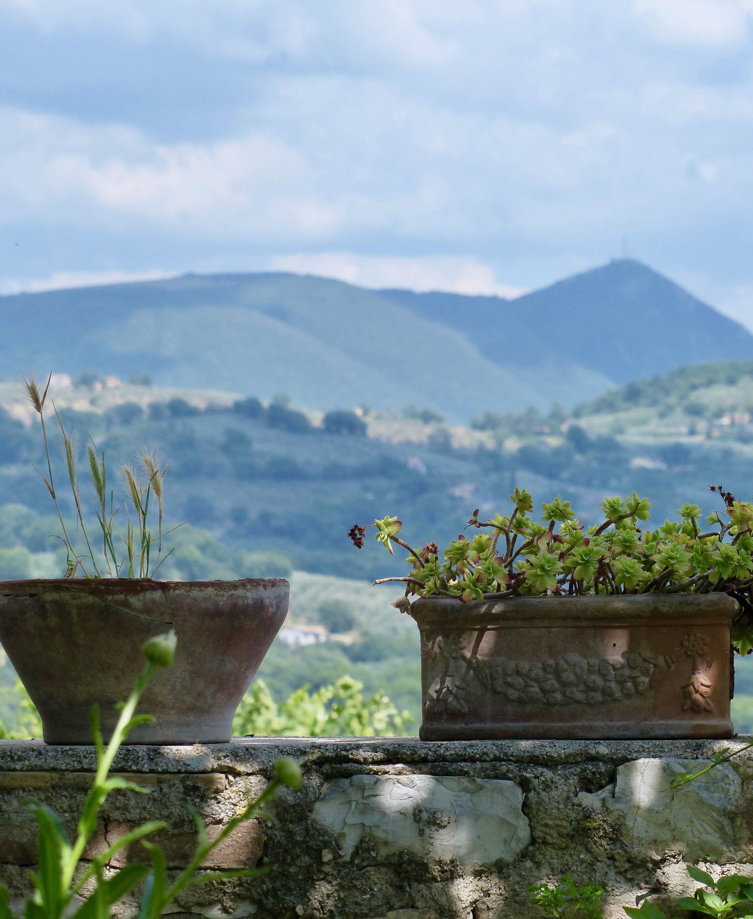 Our garden in Spello