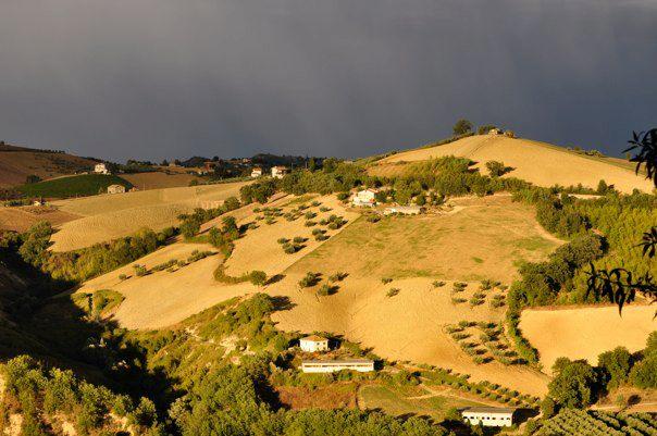 Wine Country near Loreto Aprutino, Abruzzo