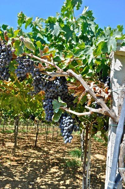 San Lorenzo Winery, A 15 mins drive from Casa carmine