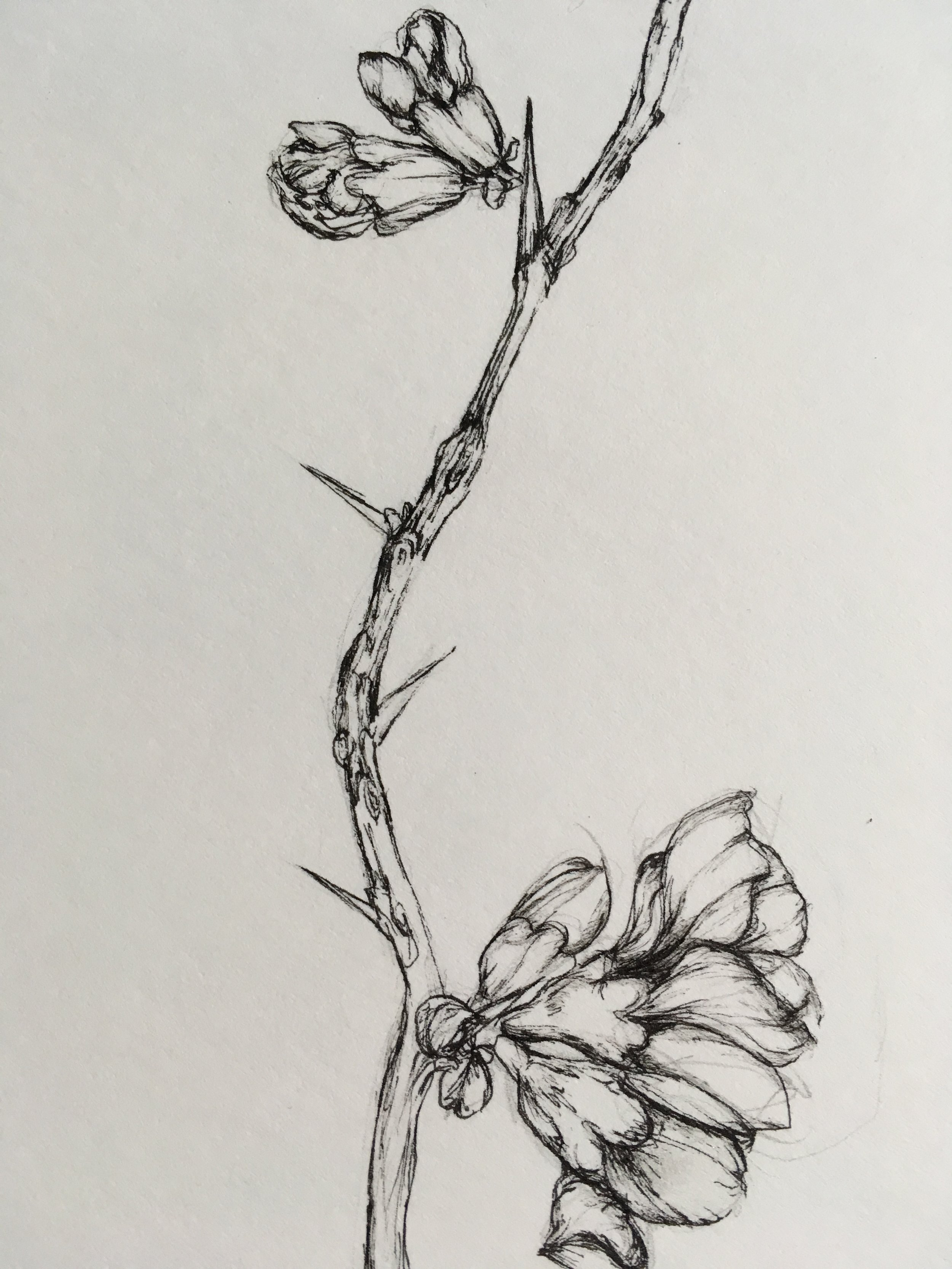 Siena's botanical art