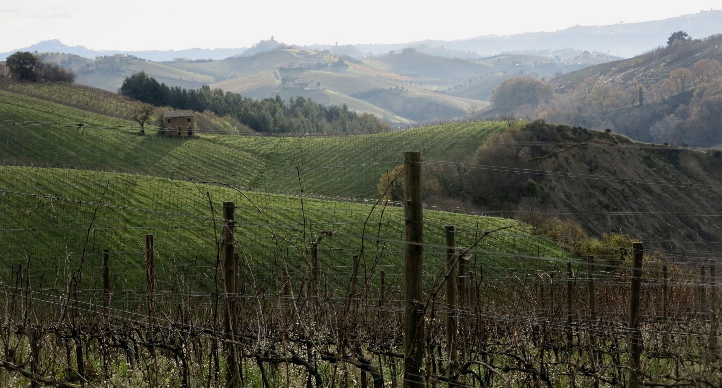 Le Marche winery, Italy
