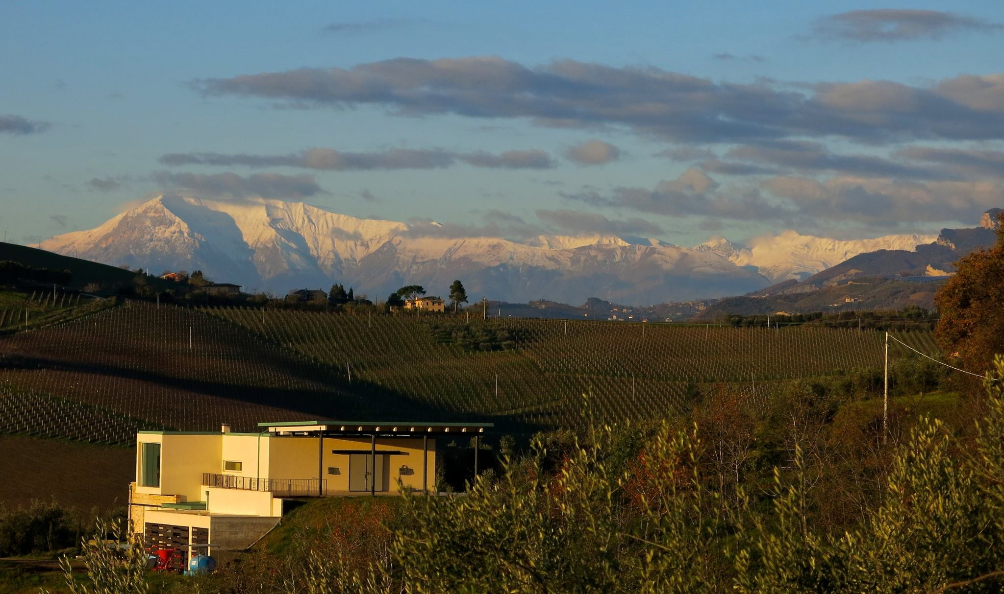 Winery in Le Marche, Italy with alps