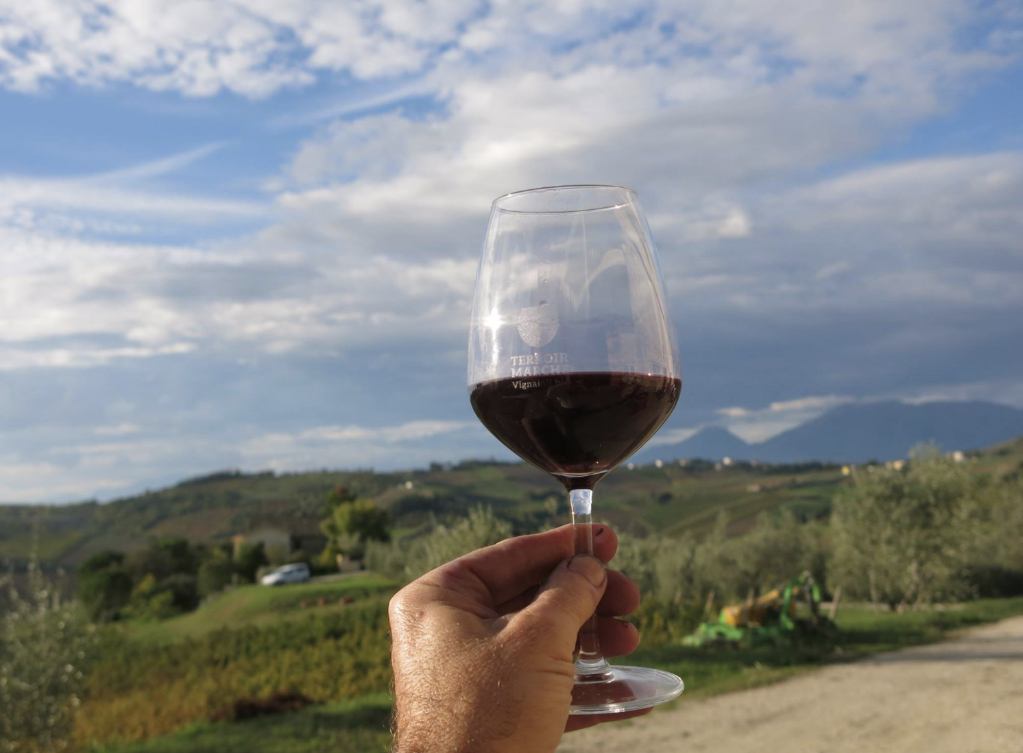 wines of le marche, Italy