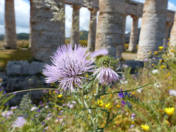 Wildflowers and ruins in Segesta, Sicily, Italy