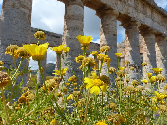 more wildflowers and ruins in segesta, sicily, Italy