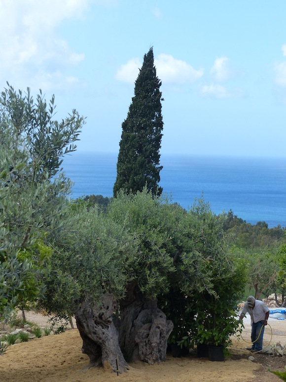 view from the terrace in scopello, sicily, italy