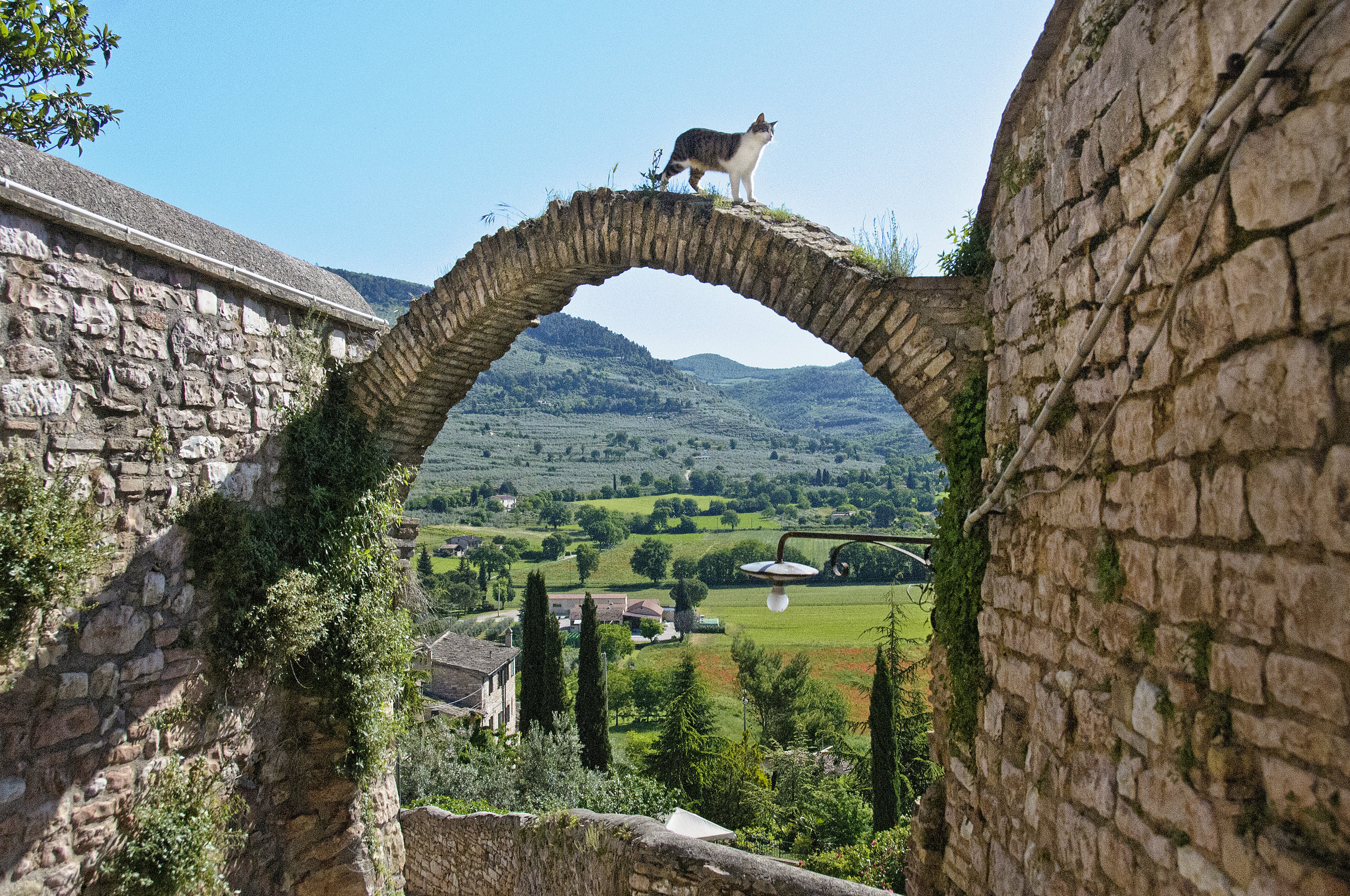 Cat on an arch in Spello, Umbria