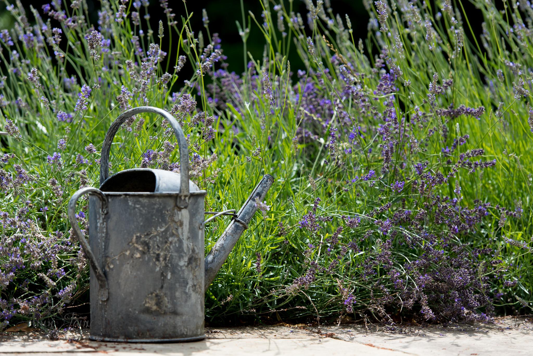 Hampshire wedding photographer / Fleet wedding photographer / Lavender / Countryside wedding / Kent wedding photographer
