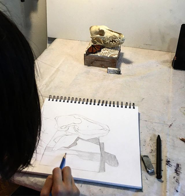 Our 12 years old student, drawing a skull and a butterfly from life 💀 🦋 . . . . #iloveart #privatelesson #artclass #drawinglessons #paintingclass #brooklynart #bayridgeartspace #artclassesforkids #artclassesforadults #wip #artsharing #paintingprocess #paintingprogress #arts_help