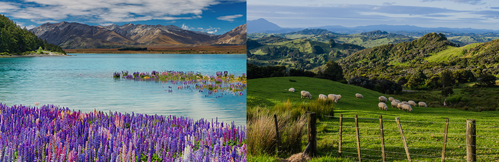 Study in New Zealand -