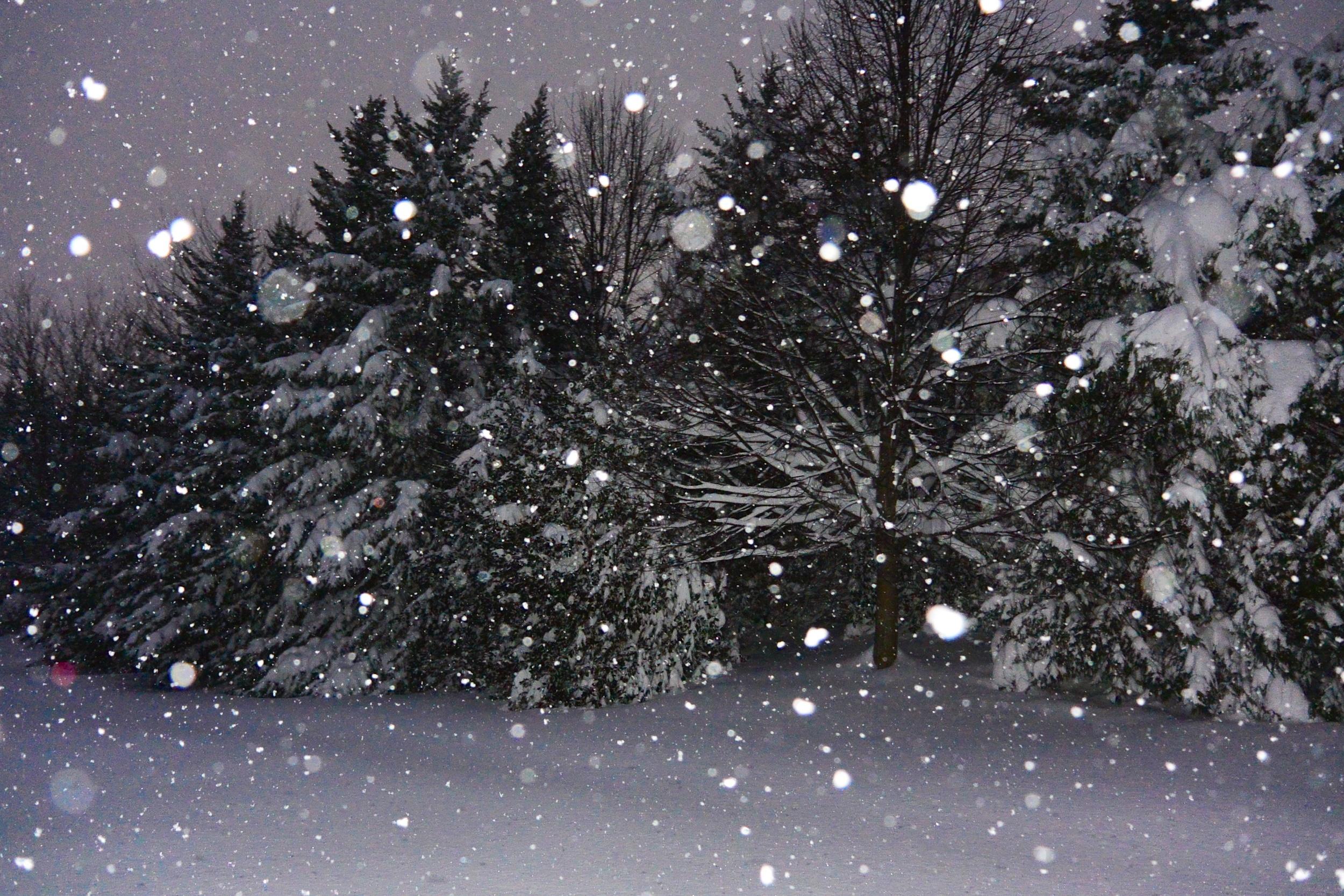 Snowzilla2016-028_DSC_9964.jpg