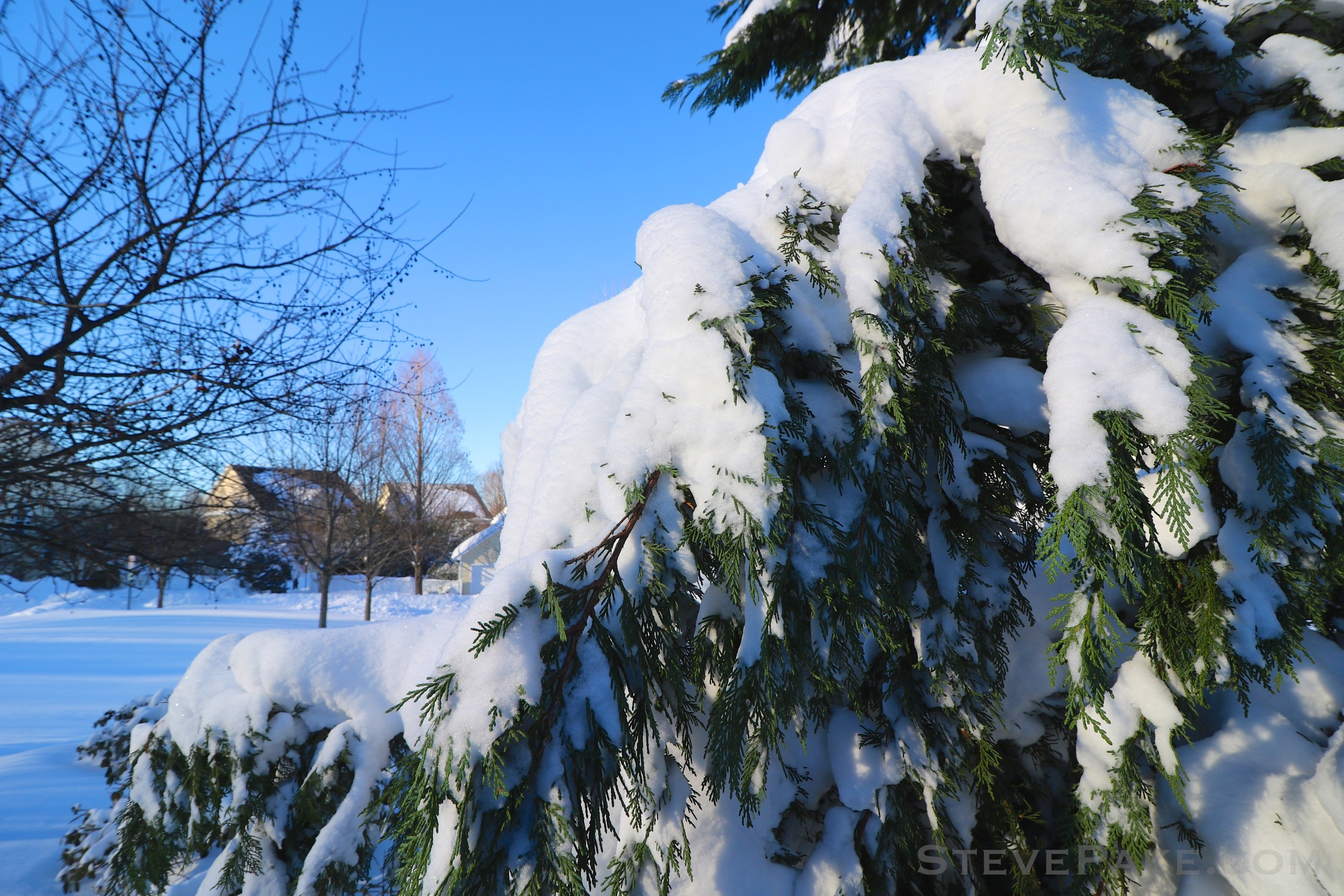 Snowzilla2016-037_GE3A5072.jpg