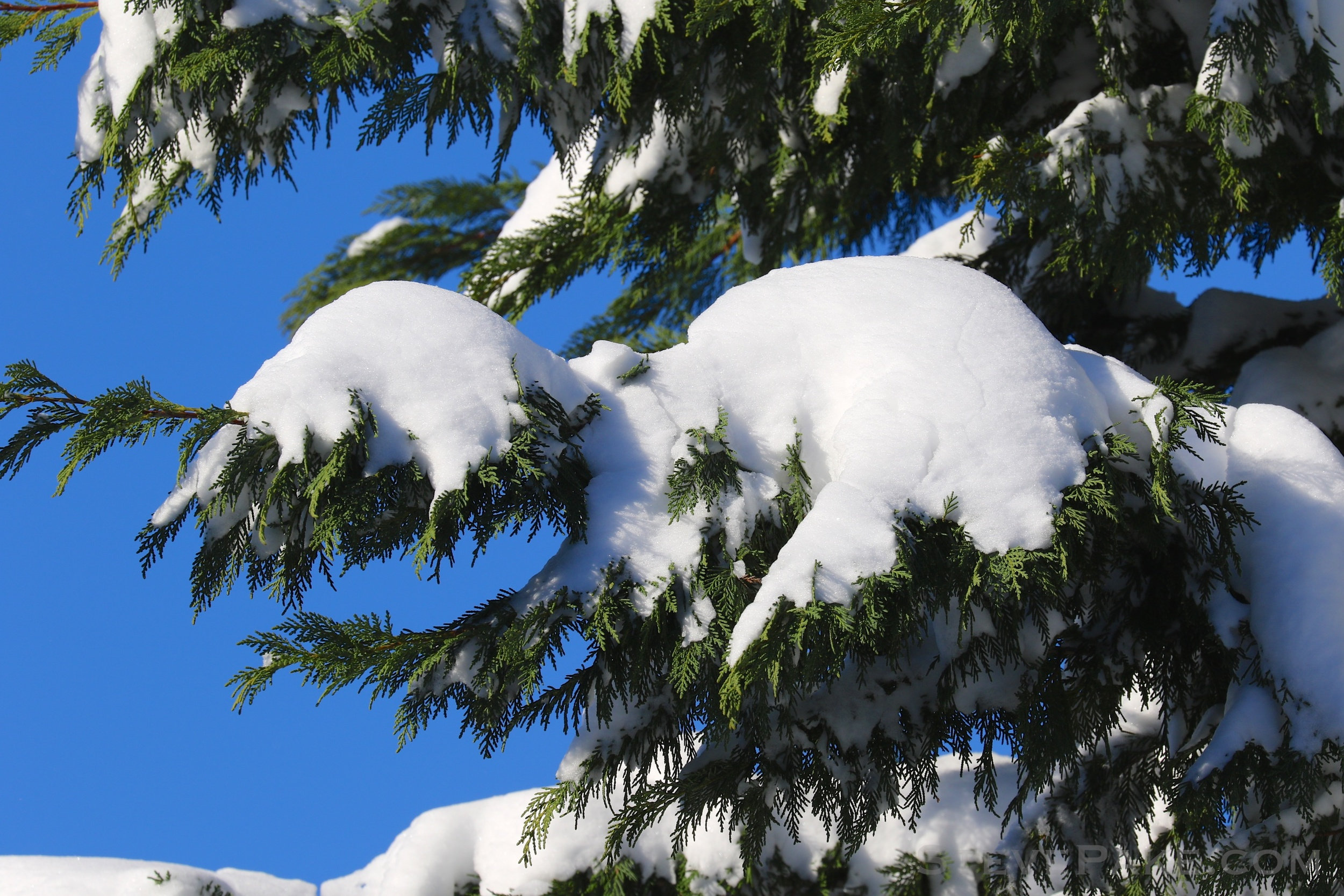 Snowzilla2016-047_GE3A5112.jpg