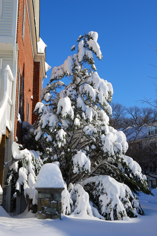 Snowzilla2016-058_GE3A5181.jpg