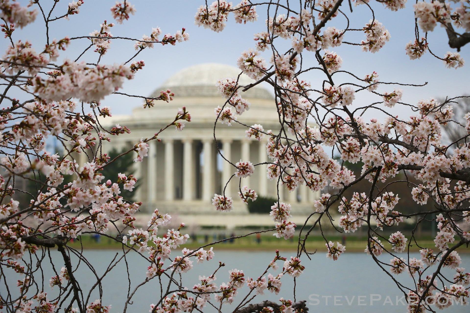 GE3A5812ap-2k_DC-Cherry-Blossoms-WM.jpg