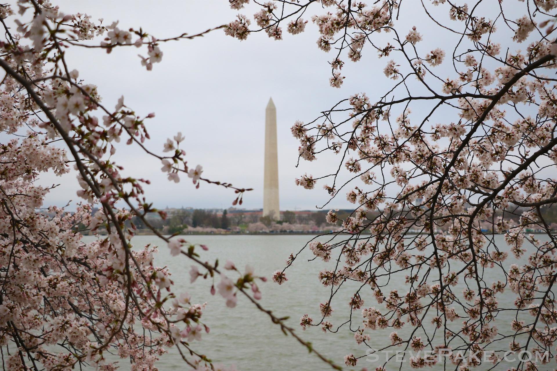 GE3A5817ap-2k_DC-Cherry-Blossoms-WM.jpg