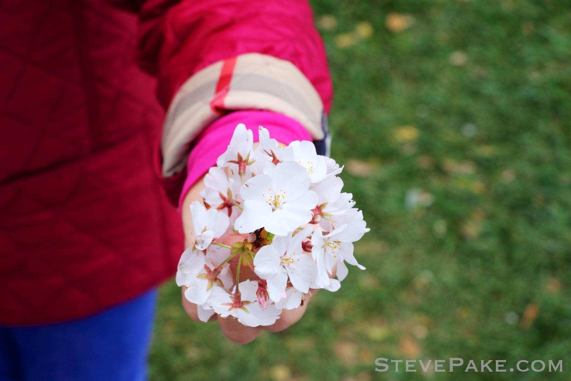 GE3A5822ap-2k_DC-Cherry-Blossoms-WM.jpg
