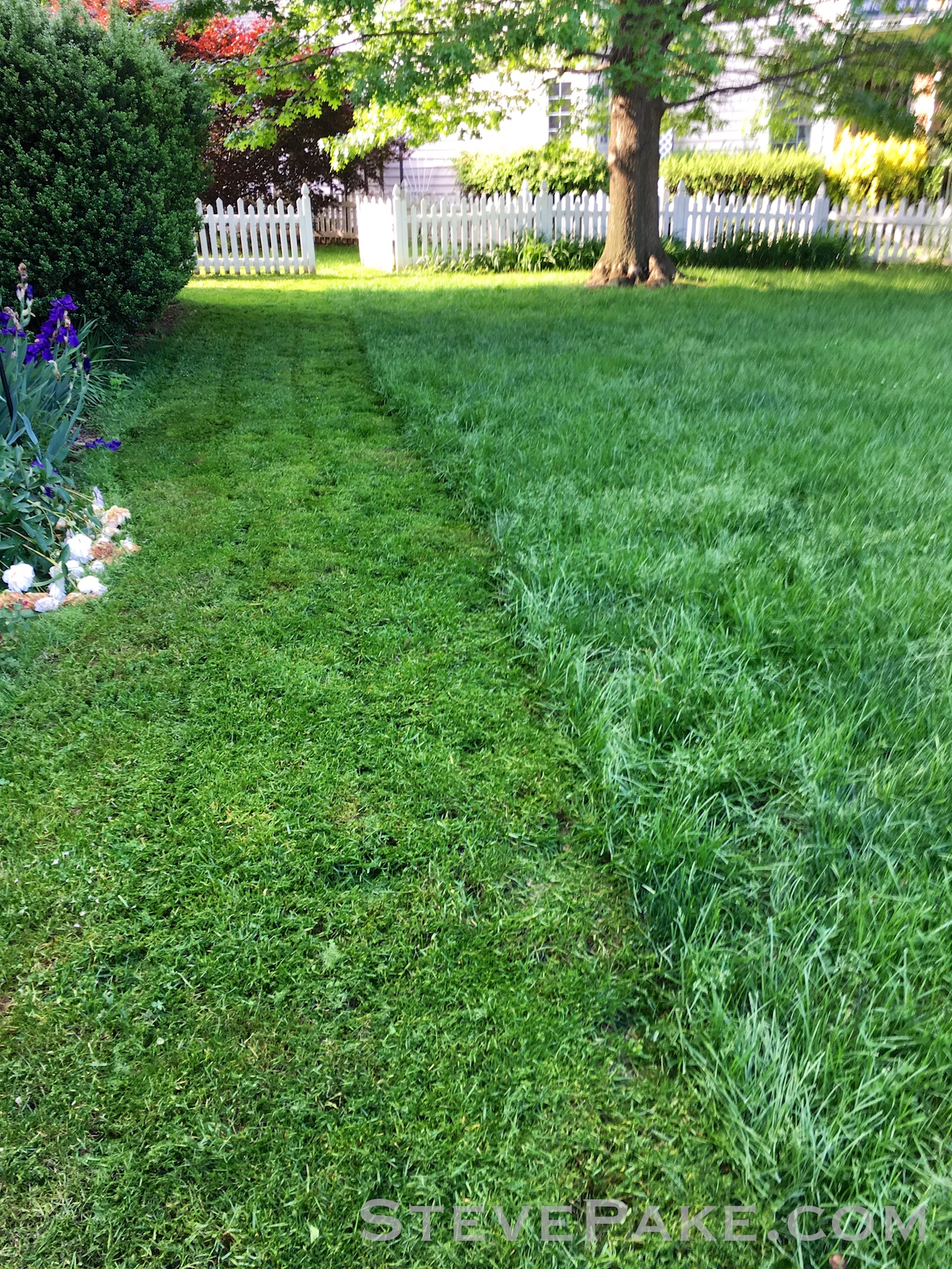 Very long and still somewhat wet grass, but no choice but to mow because it was going to rain even more!
