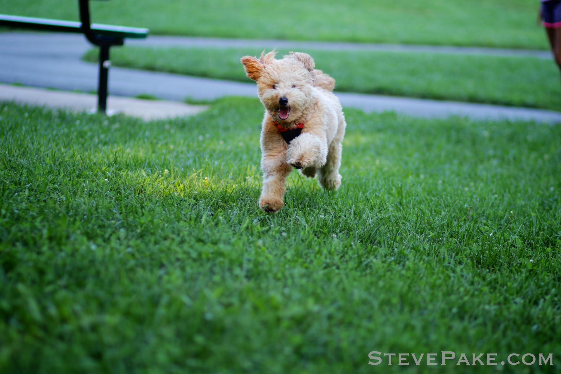 There's nothing cuter than this little fur ball coming at you at full speed! :)