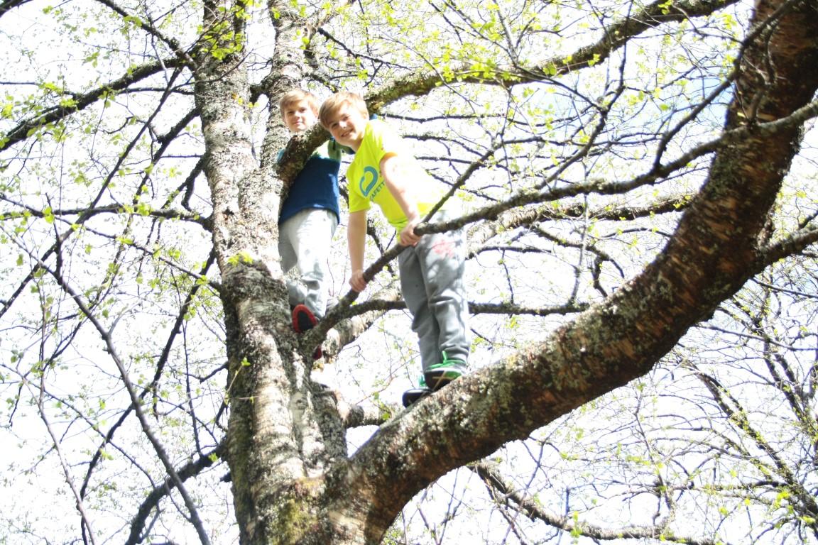 Ta vare på klatretrea