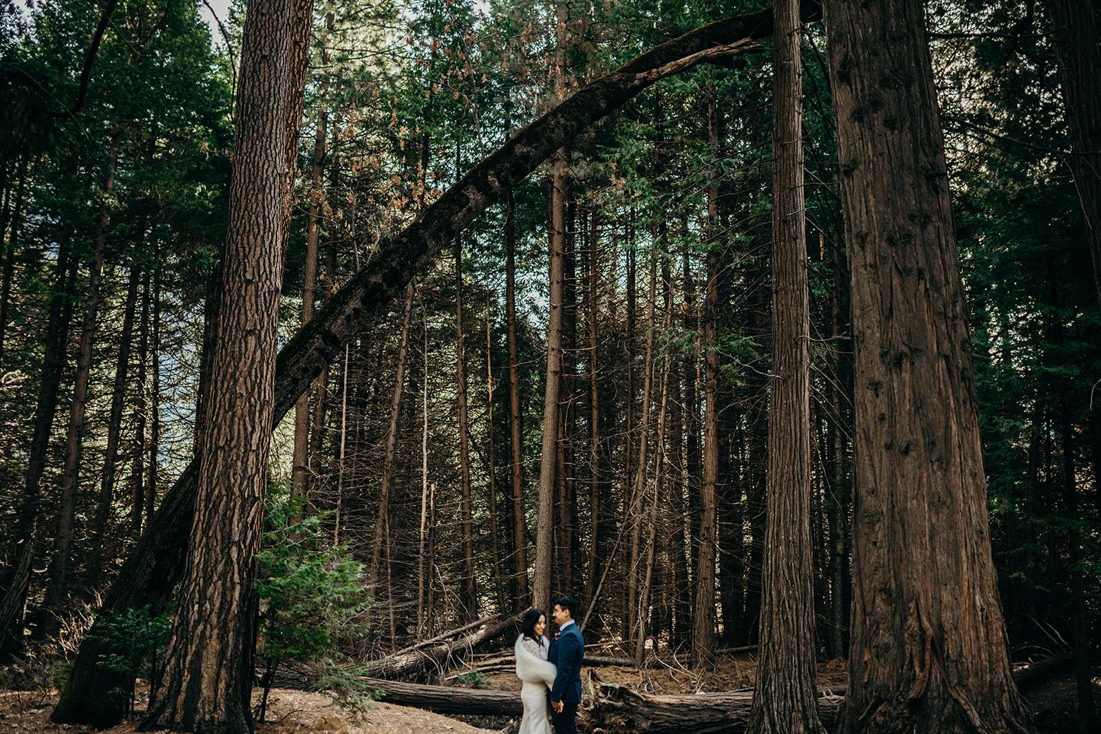AUbrey + Michael | Yosemite, California -
