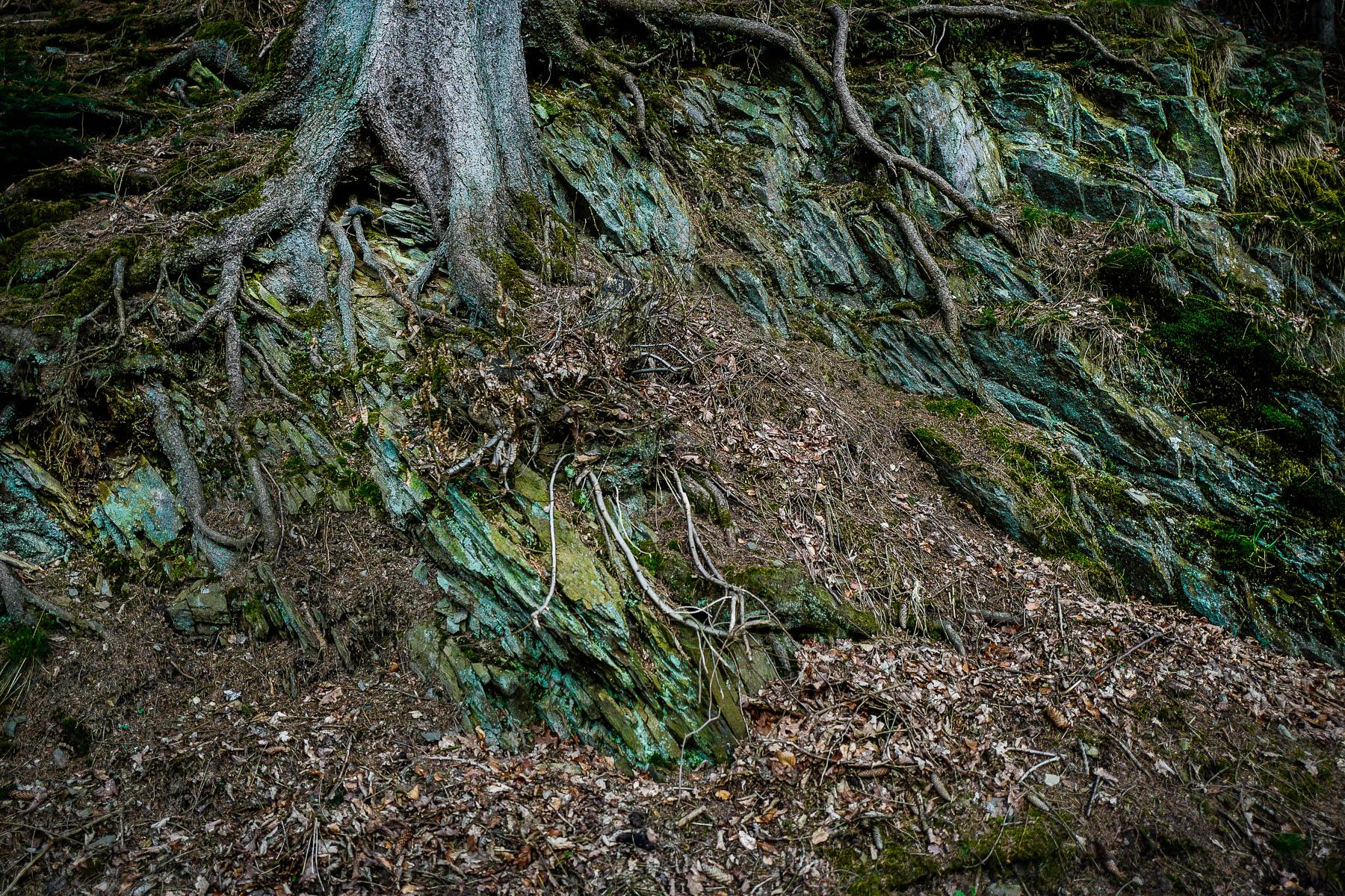 christoph neumann, green velvet, woods, roots, nature, tree