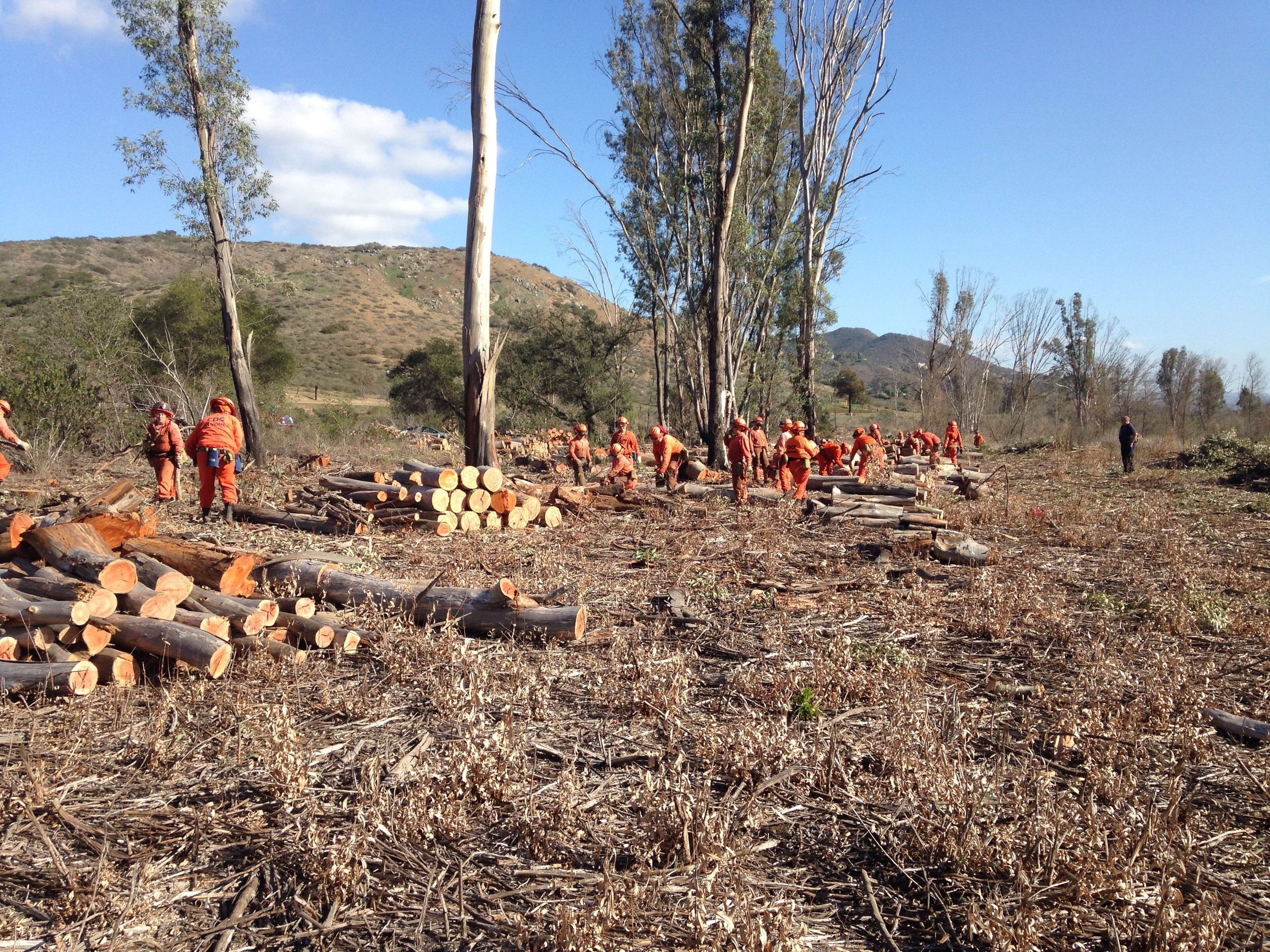 Cal Fire Crew Firewood Cleanup