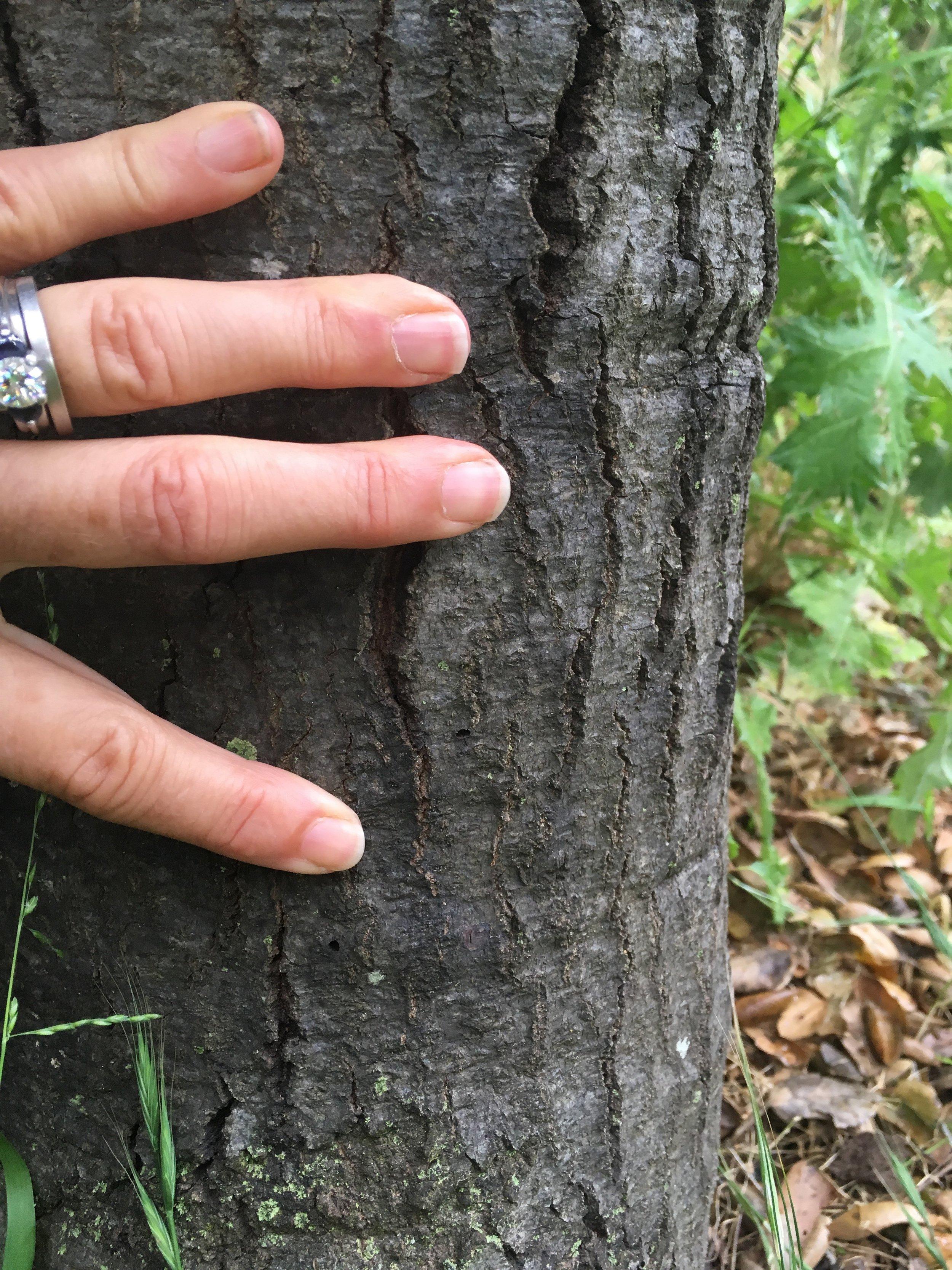 GSOB D Shaped Hole in Oak.jpg