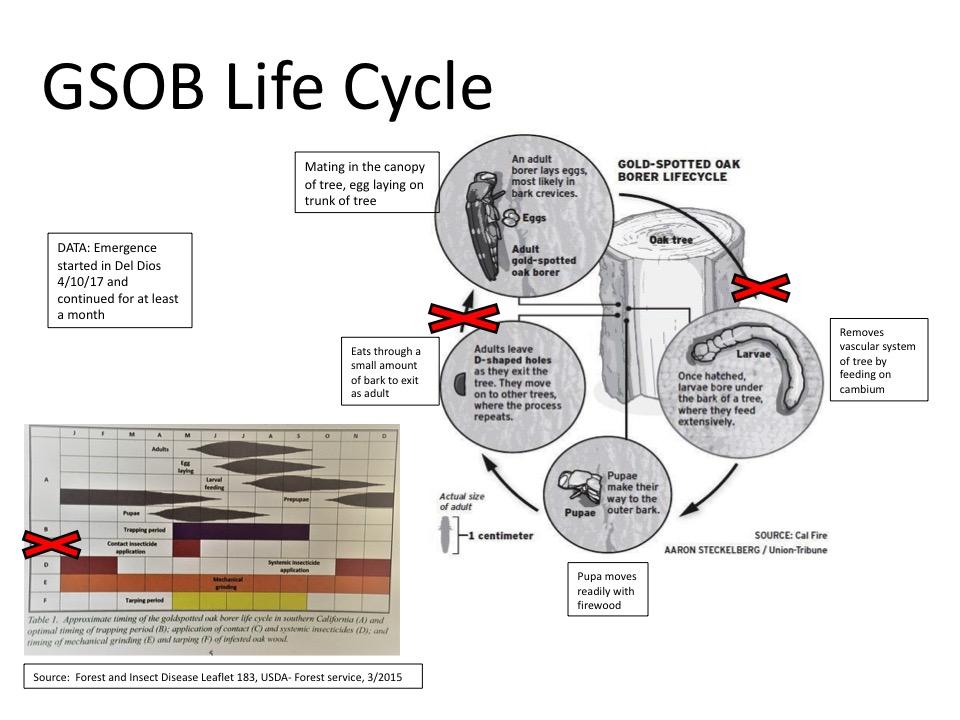 GSOB Life Cycle.jpg