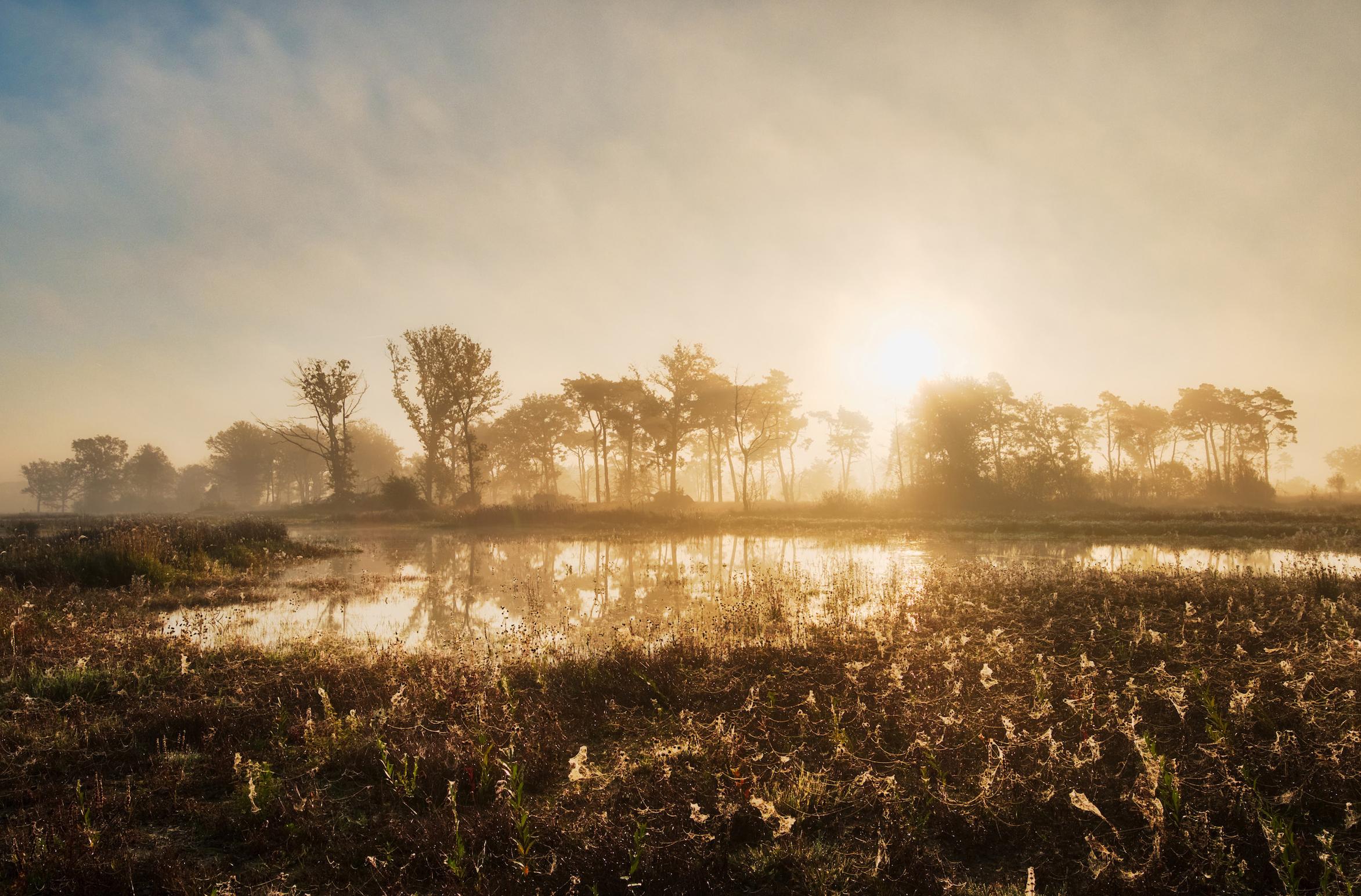Tondense Heide.jpg