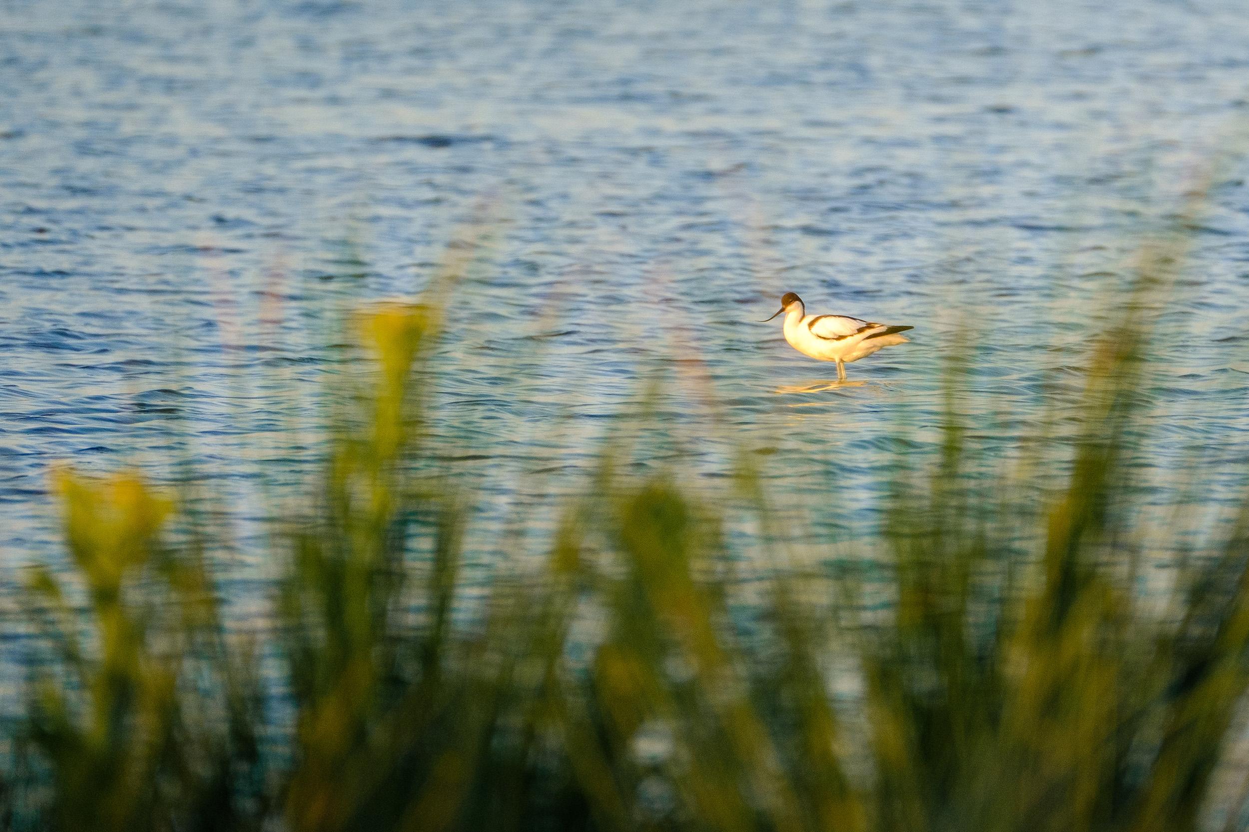 nature-bird-evening (8 of 10).jpg