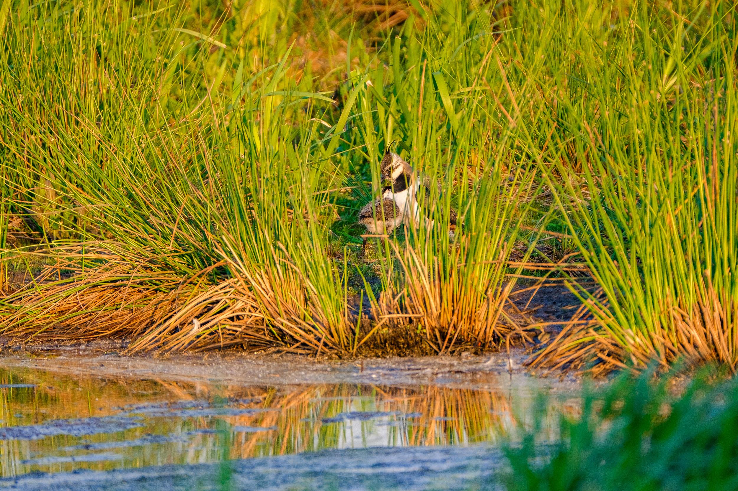 nature-bird-evening (10 of 10).jpg