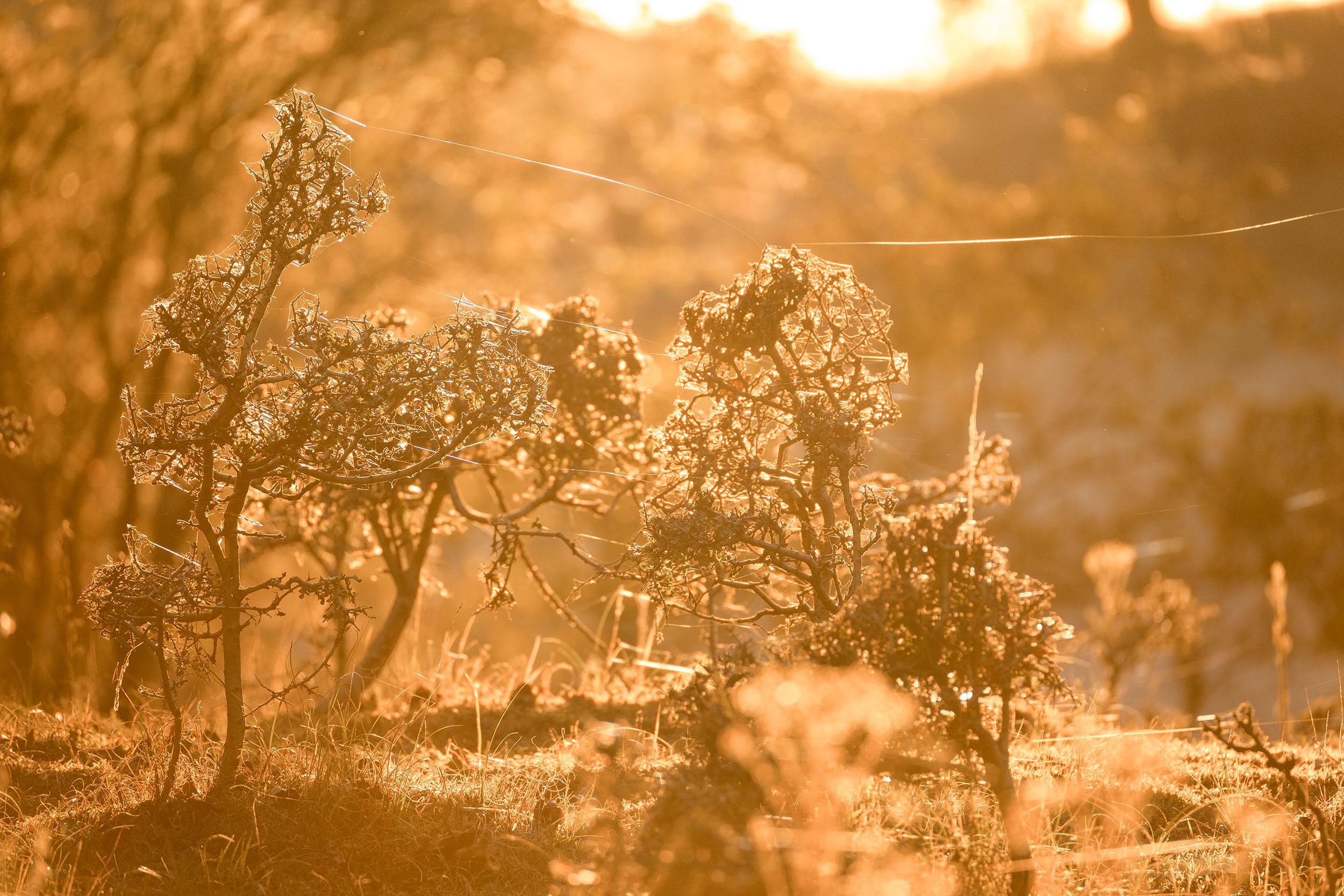 Early Autumn Dunes-4.jpg