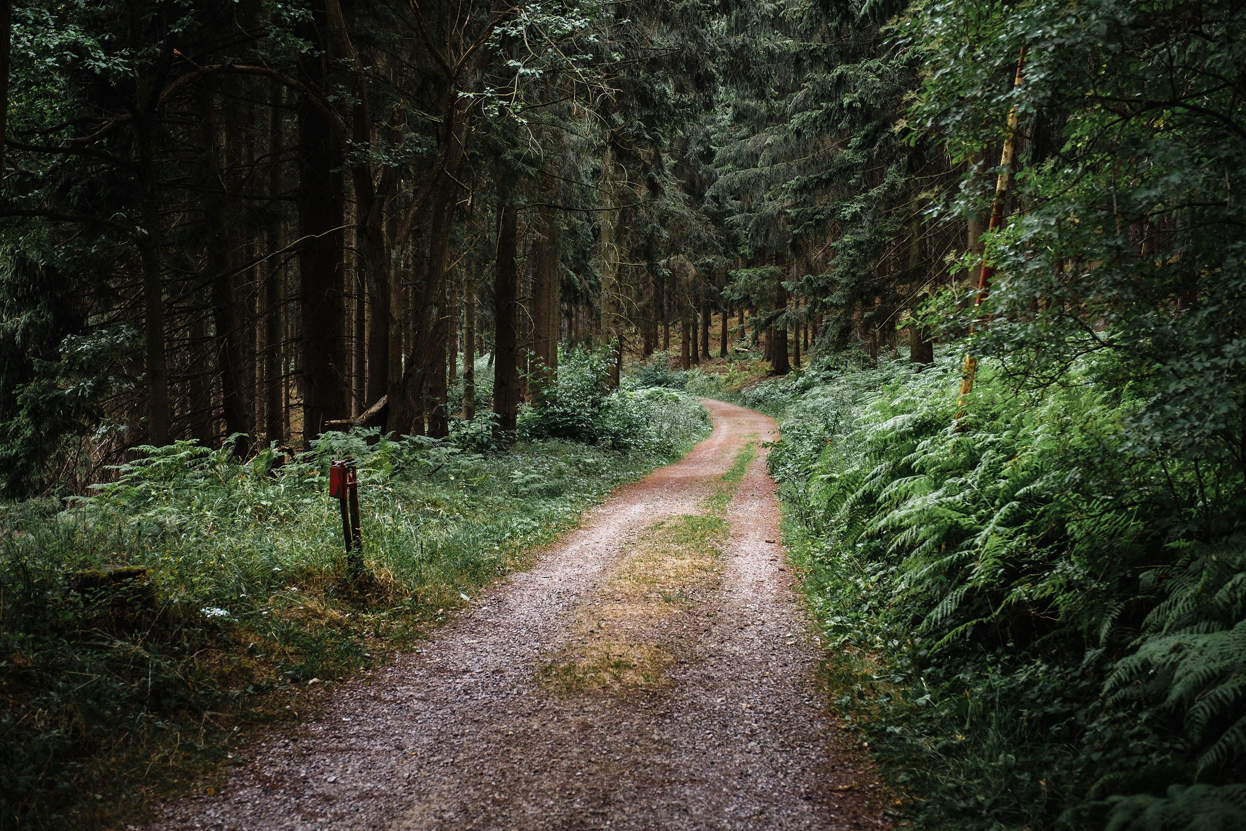 Hurtgen Wald-1.jpg