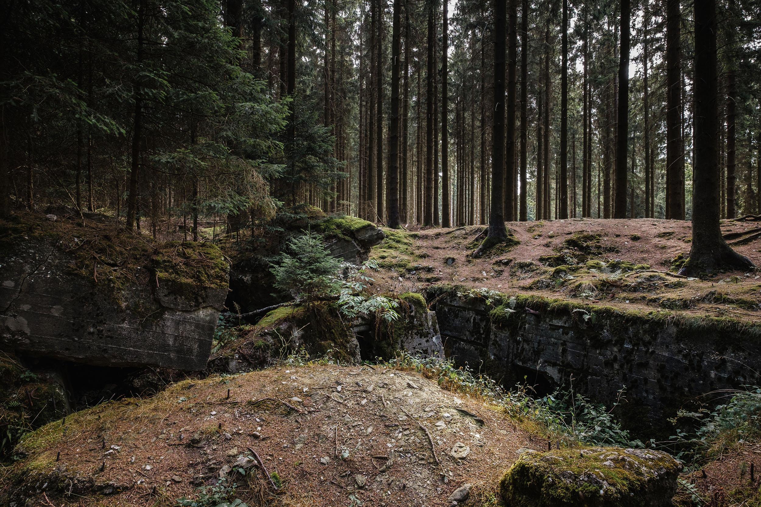 Hurtgen Wald-5.jpg