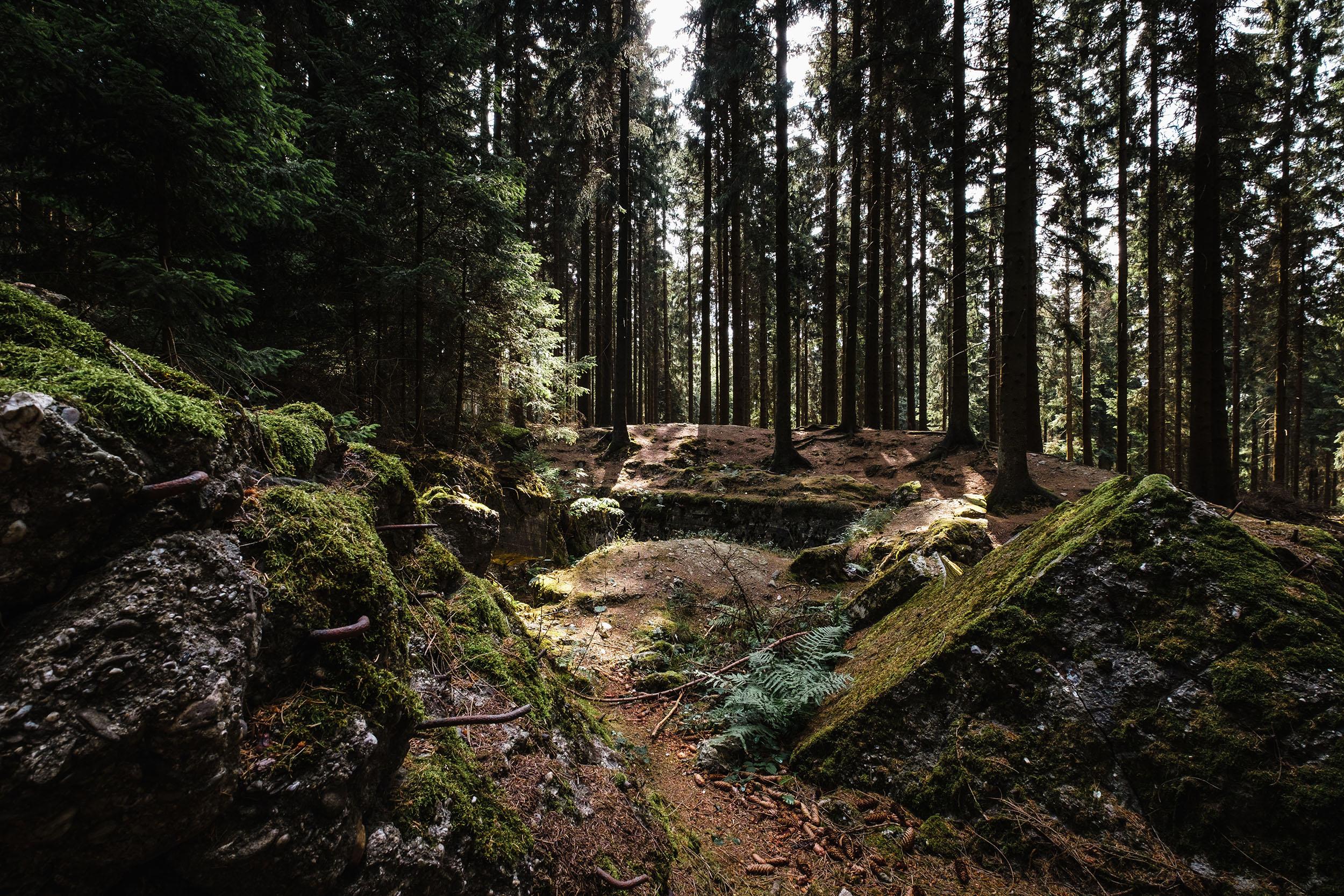 Hurtgen Wald-8.jpg