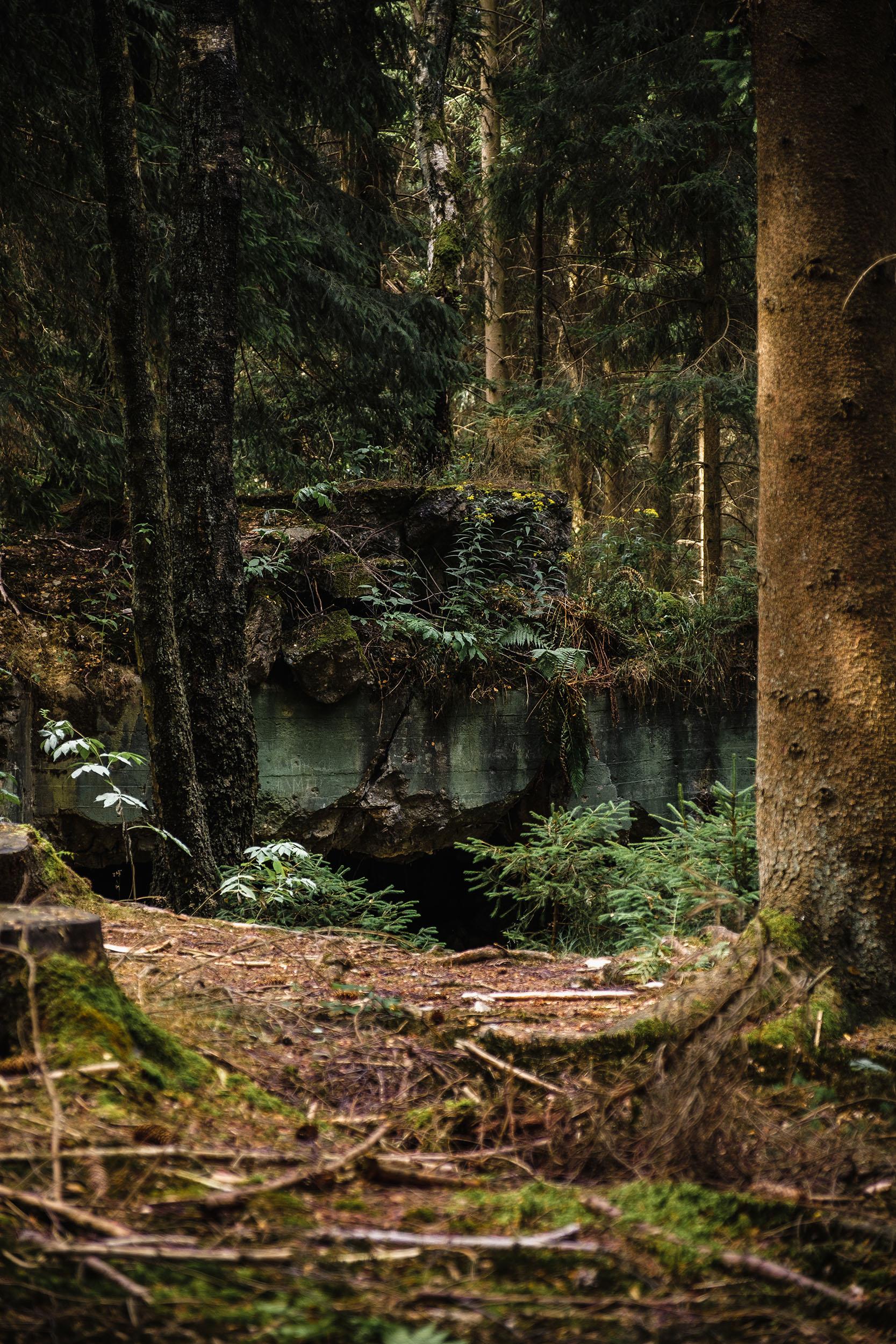Hurtgen Wald-10.jpg