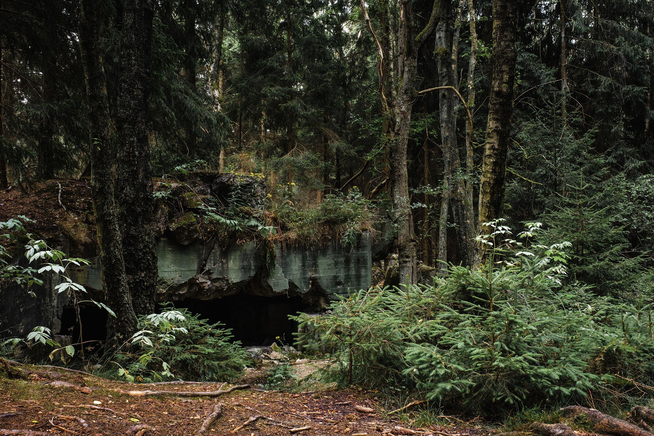 Hurtgen Wald-11.jpg