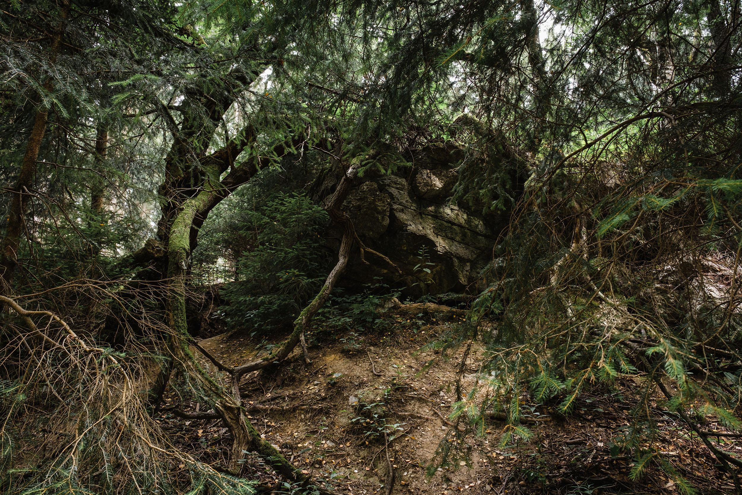 Hurtgen Wald-15.jpg