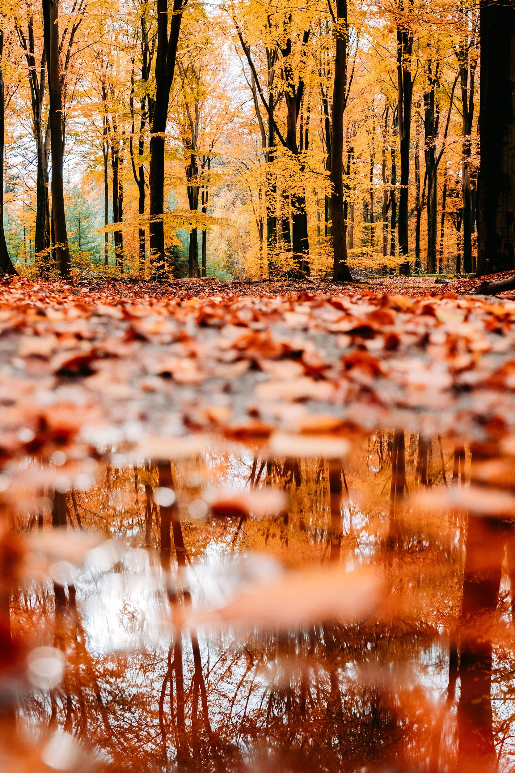 Speulderbos Herfst-10.jpg