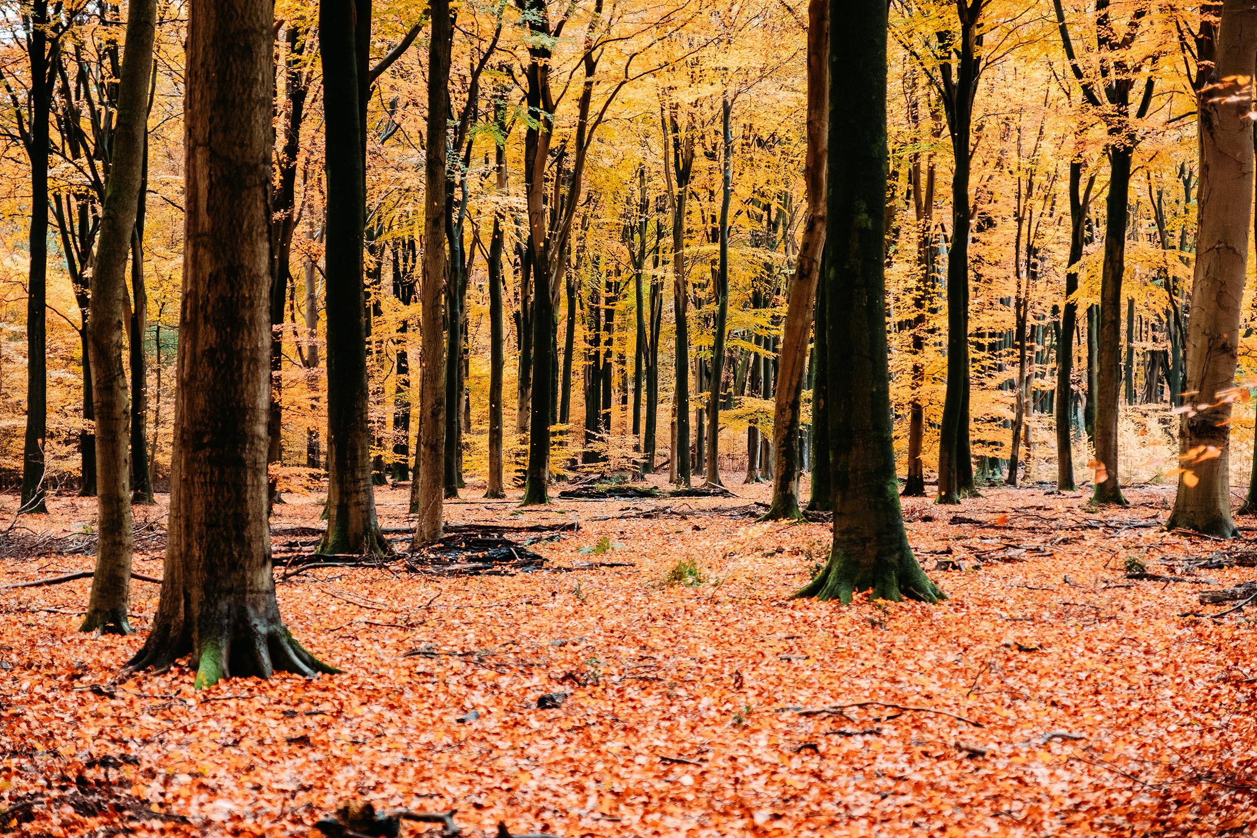 Speulderbos Herfst-2.jpg