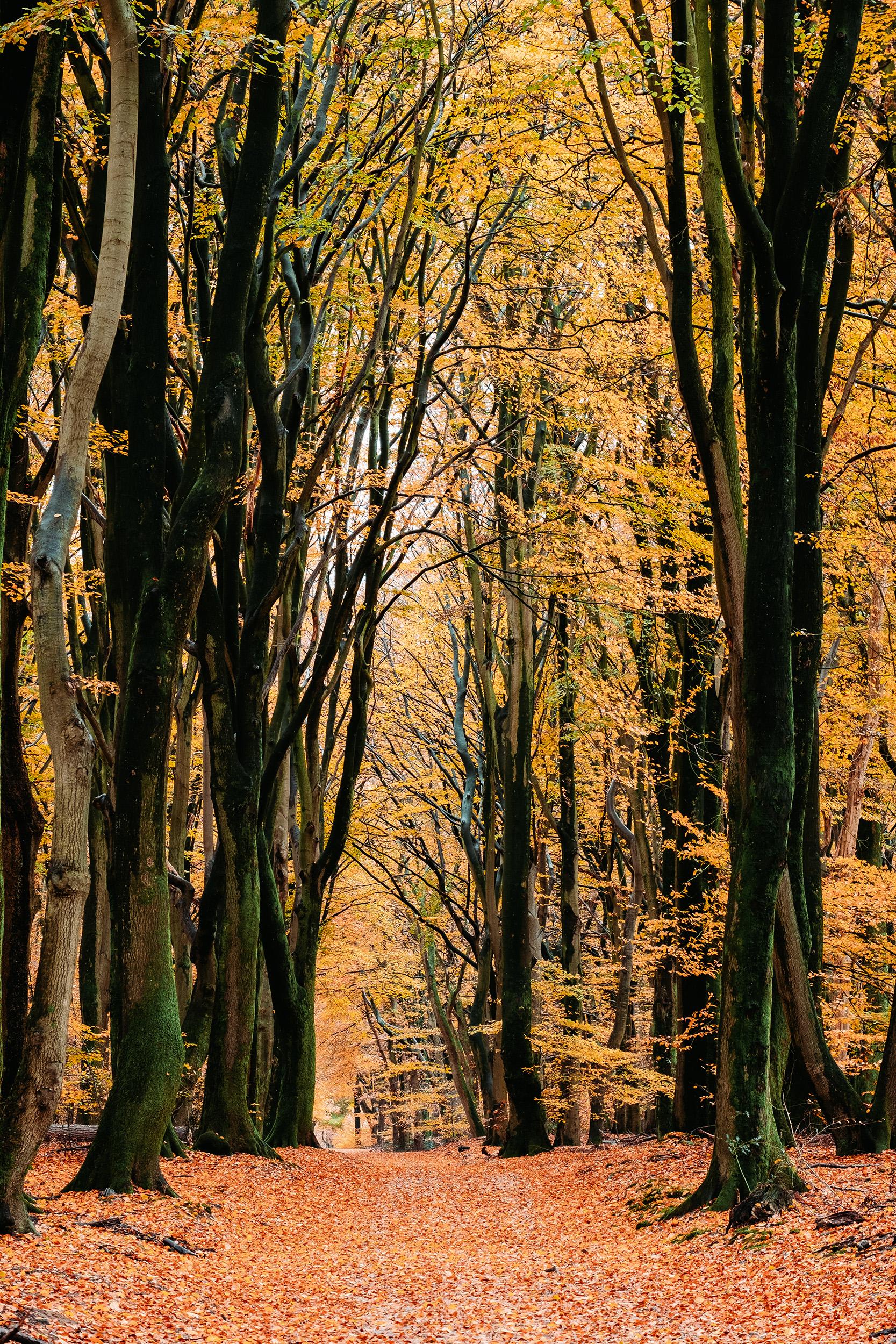 Speulderbos Herfst-5.jpg
