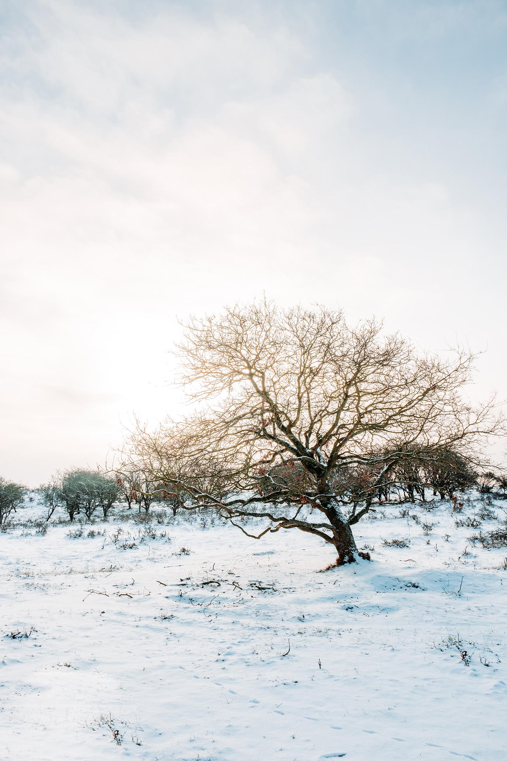 Waterleidingduinen Sneeuw-1.jpg