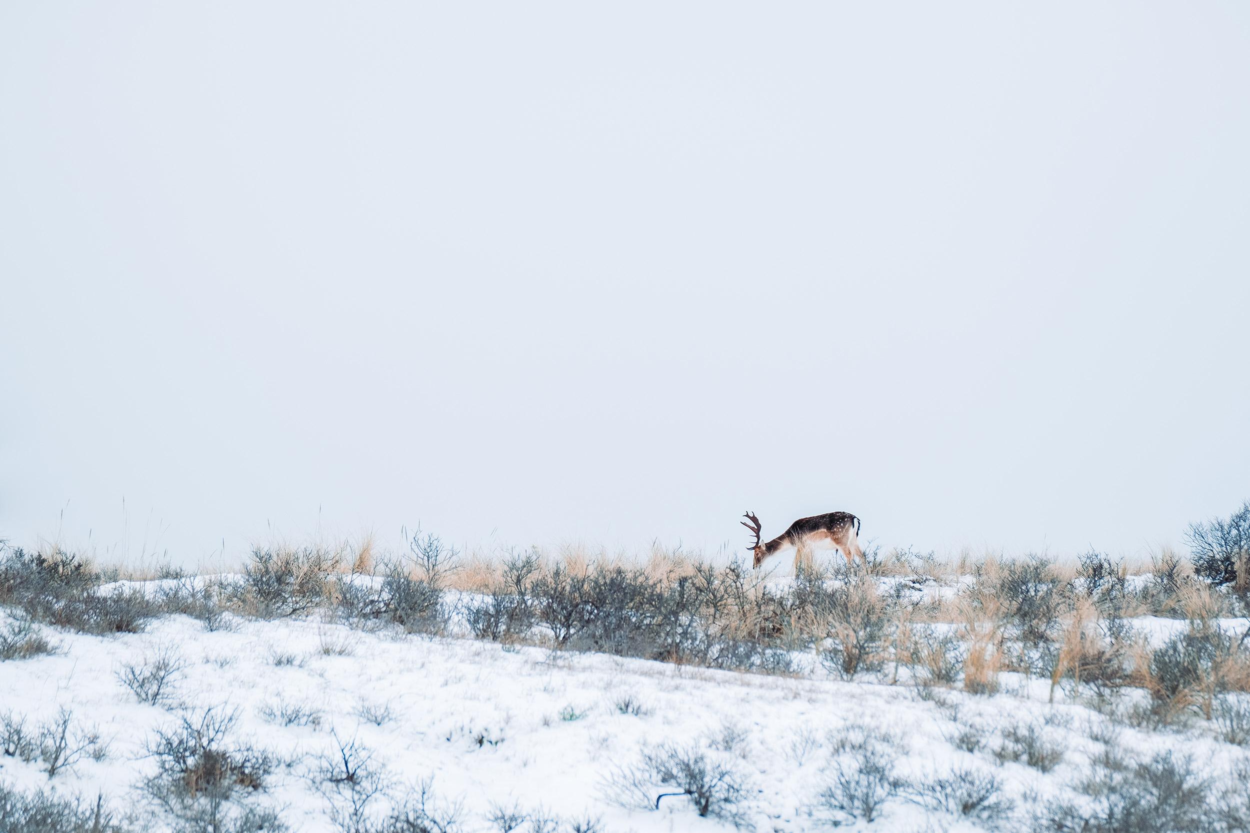 Waterleidingduinen Sneeuw-3.jpg
