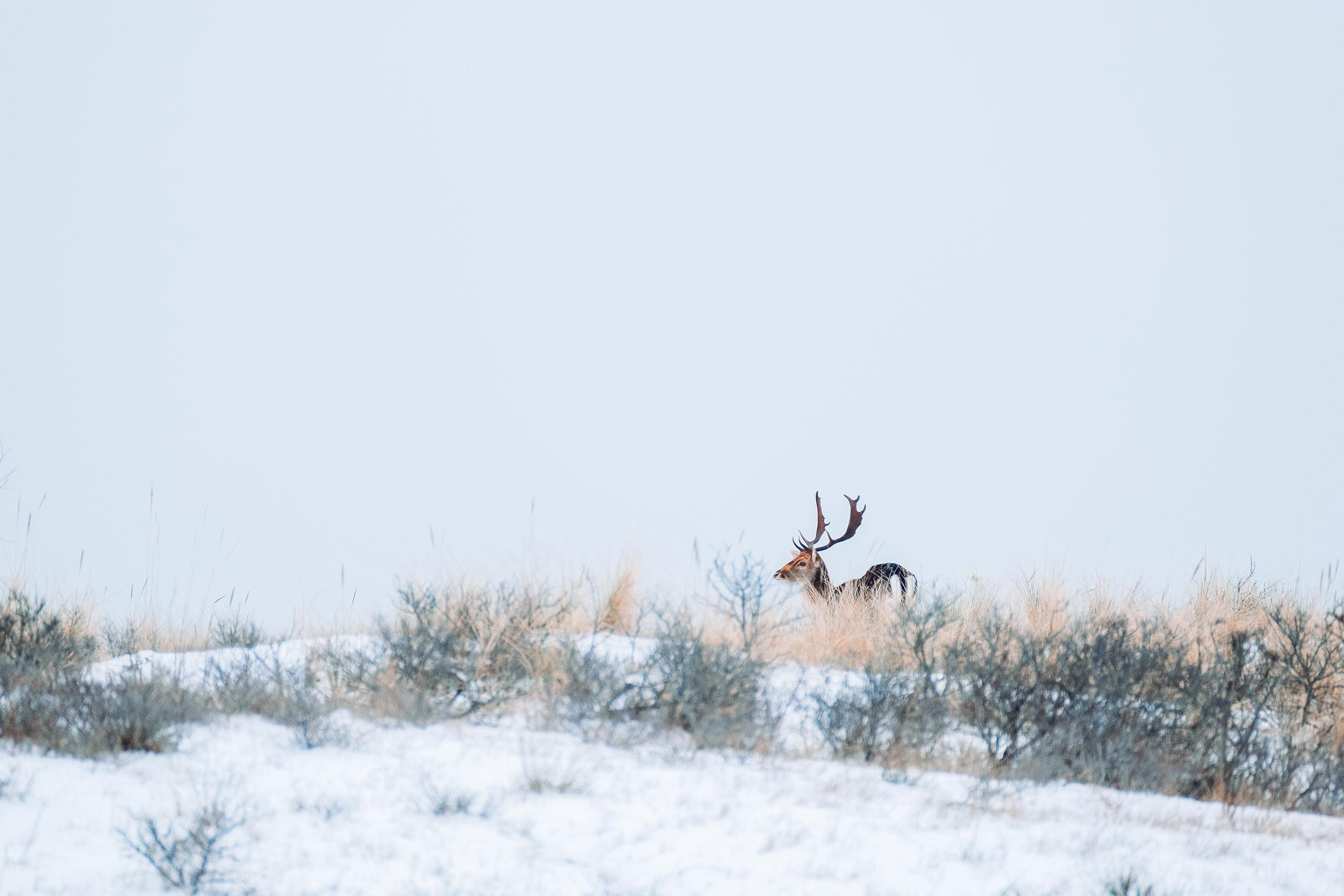 Waterleidingduinen Sneeuw-4.jpg